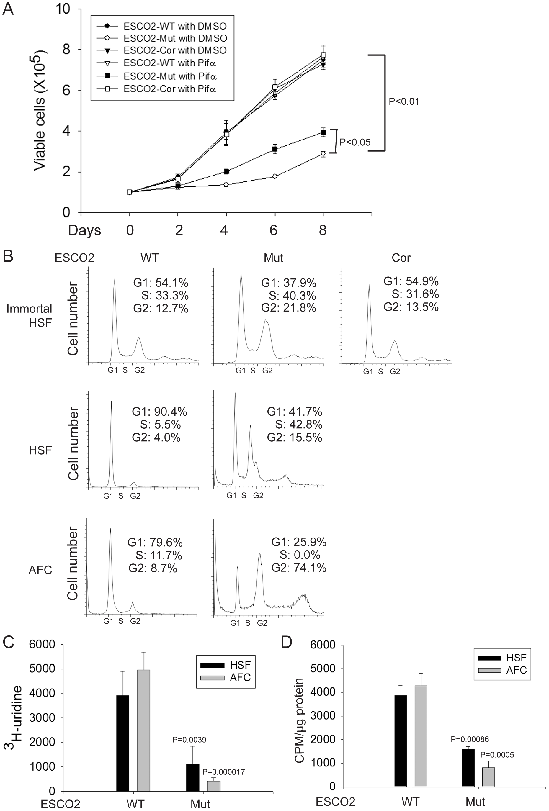 Human RBS cells showed severely slow proliferation and decreased protein translation.