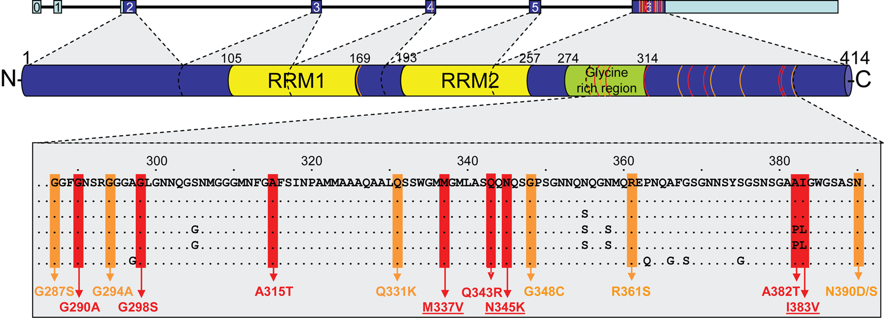 Overview of mutations identified to date in <i>TARDBP</i>.