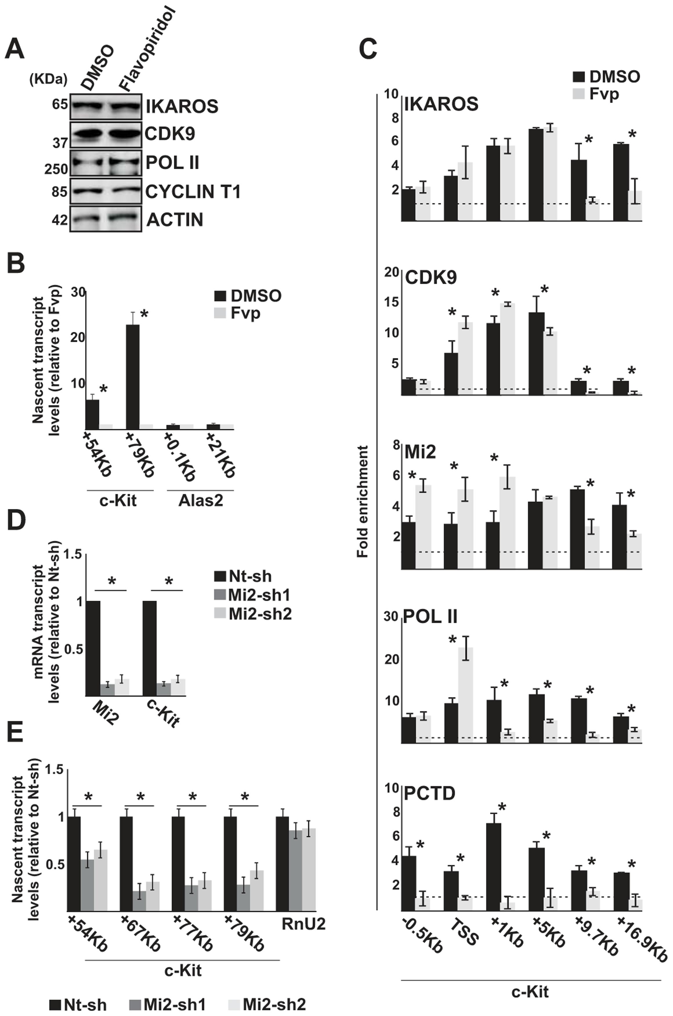 The IKAROS-NuRD-P-TEFb complex assists POL II during transcription elongation.