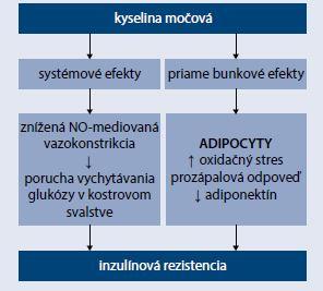 Schéma 2 | Potencionálne mechanizmy efektu kyseliny močovej na inzulínovú rezistenciu. Upravené podľa [18]