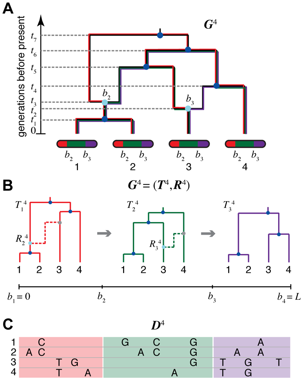 An ancestral recombination graph (ARG) for four sequences.