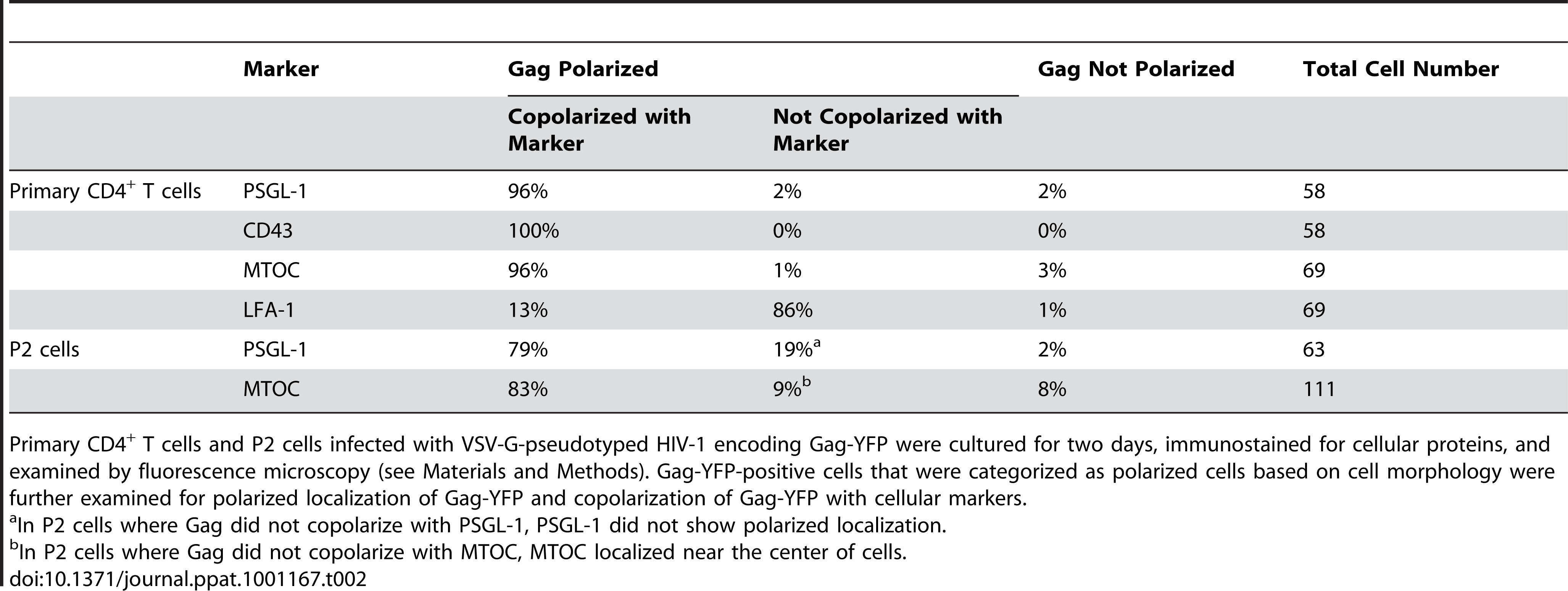Copolarization of Gag with Cellular Markers.