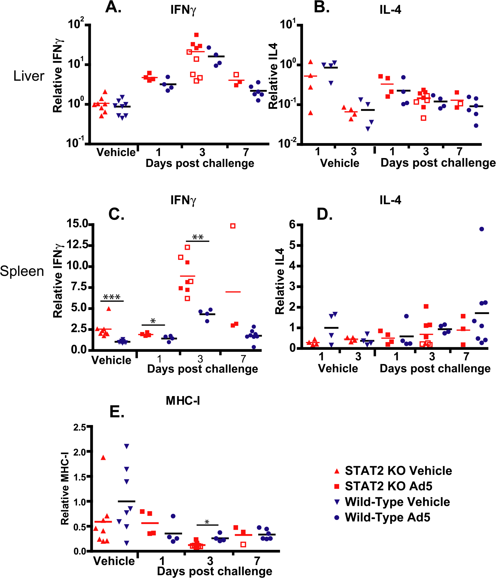 Cytokine expression in the liver is similar in wt and STAT2 KO hamsters; however, the expression of IFNγ is up-regulated in the spleen of STAT2 KO hamsters compared to wt ones.
