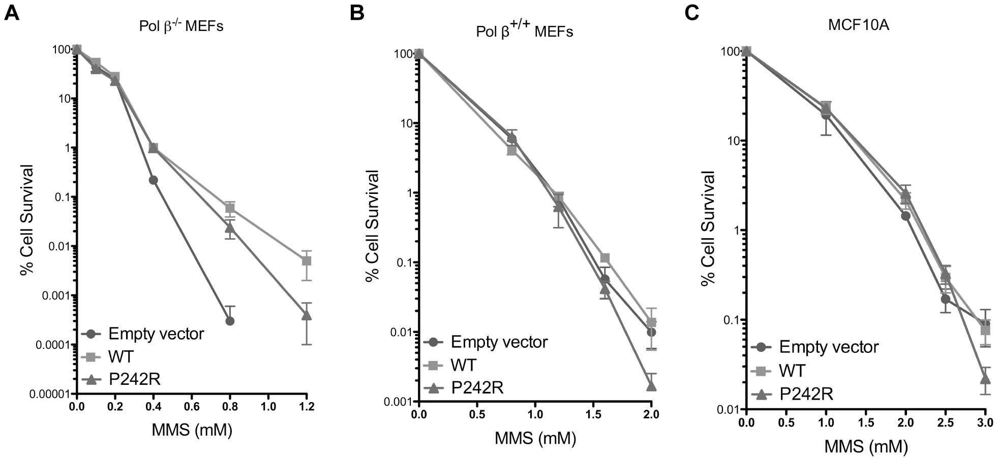 P242R Pol β confers slight sensitivity to MMS compared to WT.