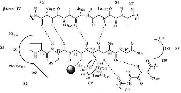 Schéma aktívneho miesta MMP-8 s prirodzeným substrátom <sup>4)</sup>
