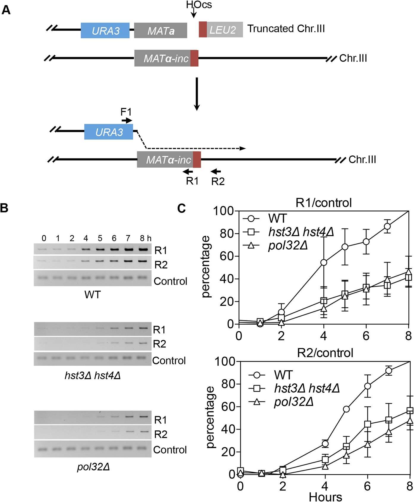 <i>hst3</i>Δ <i>hst4</i>Δ and <i>pol32</i>Δ mutants are defective in the DNA synthesis step of BIR.