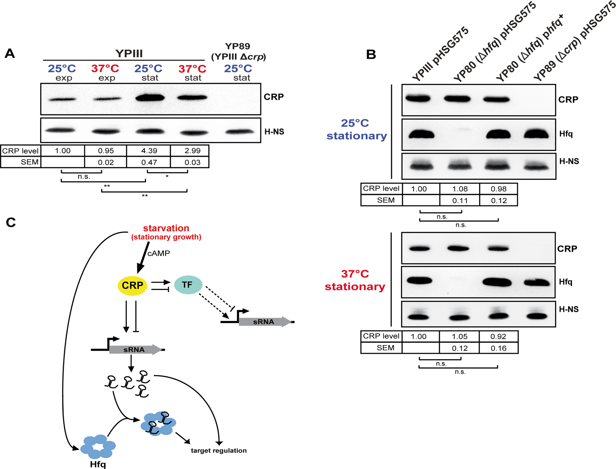 CRP, a growth phase and temperature-responsive master regulator in <i>Y. pseudotuberculosis</i>.