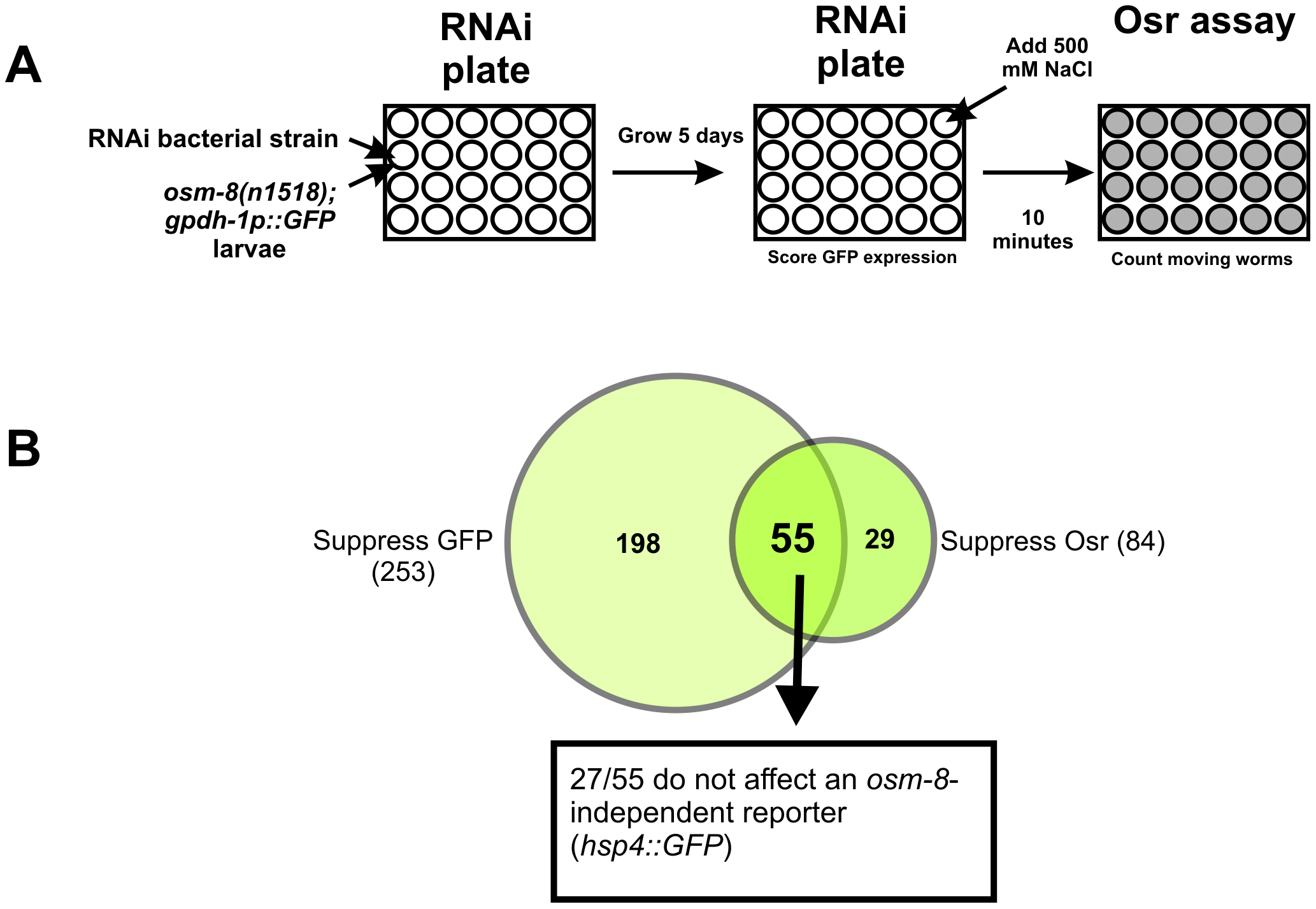 A genome-wide RNAi screen identifies suppressors of <i>osm-8</i> phenotypes.