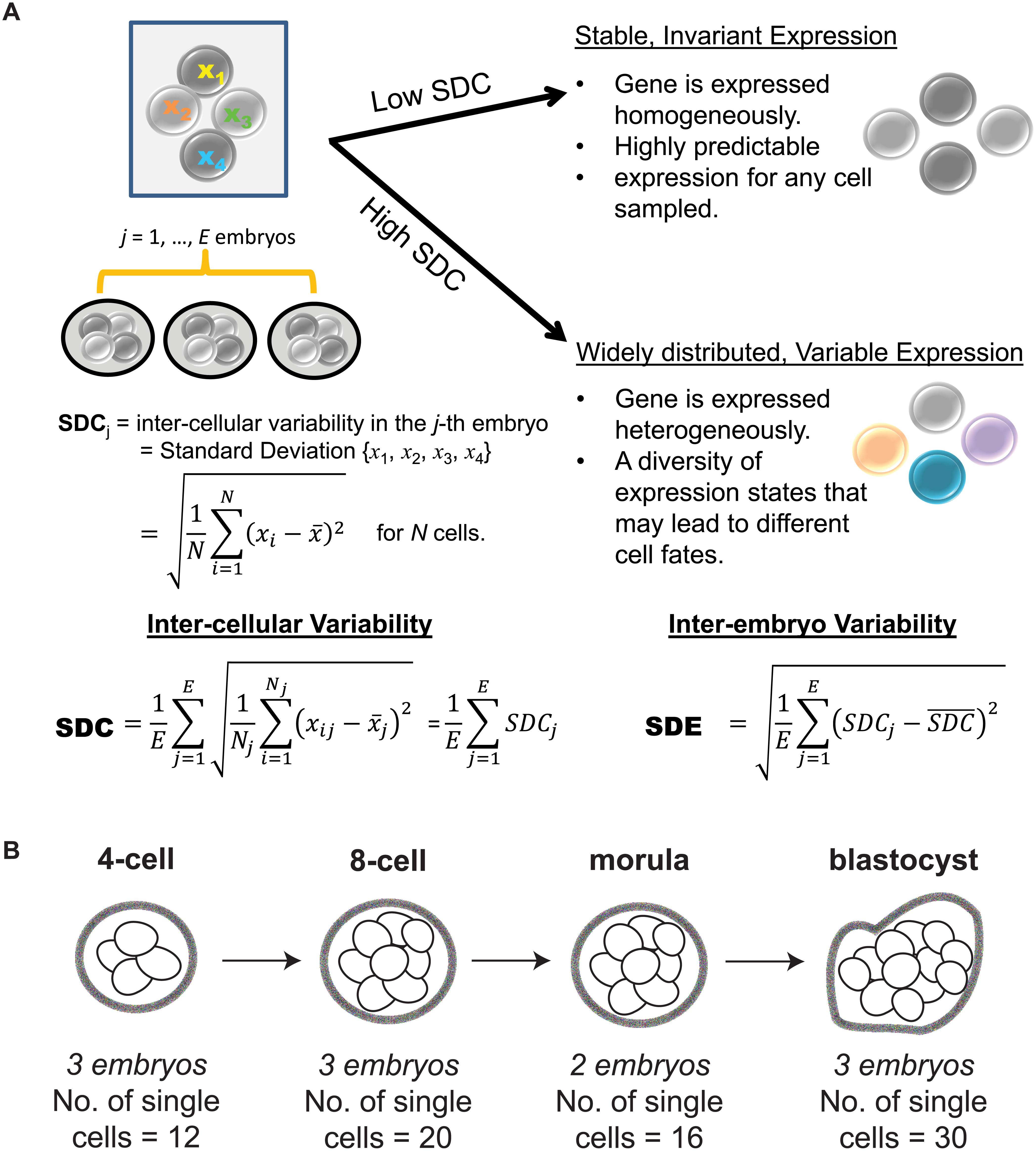 Investigating inter-cellular gene expression variability.