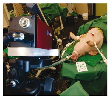 Fig. 9: Experimental setup during the animal trial with the field of view of the PPGI camera on the anesthetized pig [13].