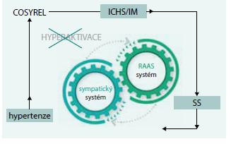 Schéma 2. Synergické působení bisoprololu a perindoprilu (COSYREL) na zvýšenou aktivitu sympatiku a sytému RAAS