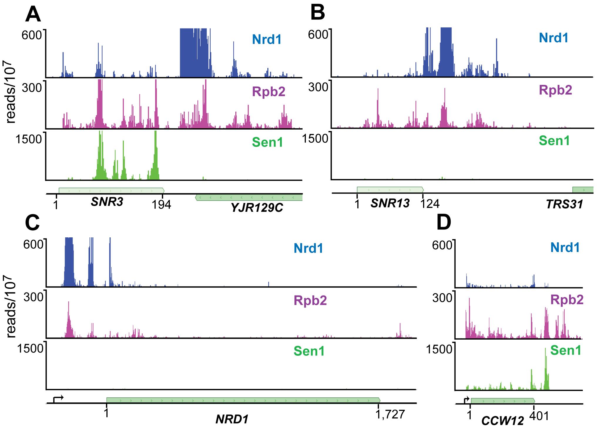 PAR-CLIP plots for Nrd1, Rpb2, and Sen1.