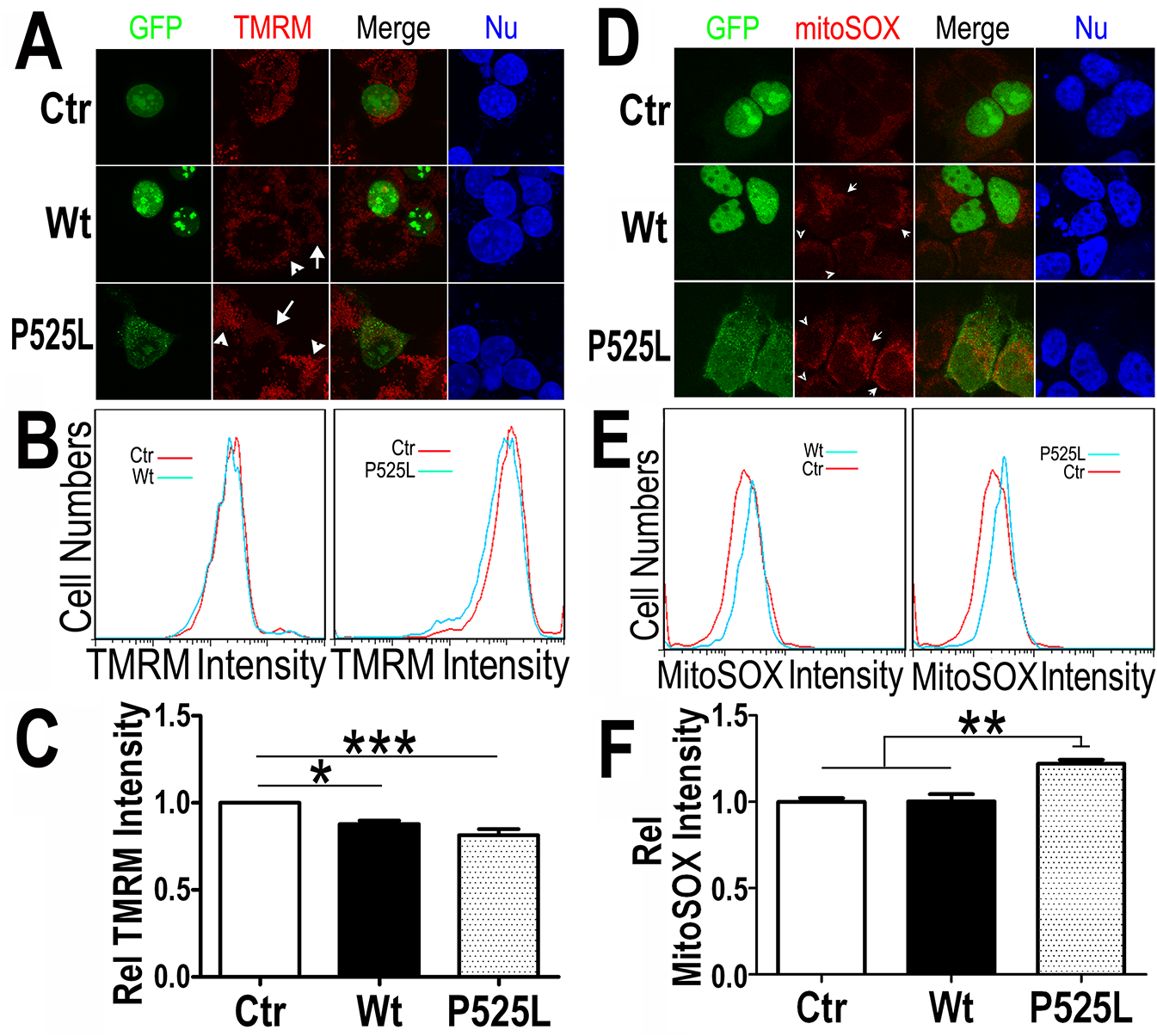 Increased expression of Wt- or P525L-mutant FUS induced a decrease in mitochondrial membrane potential and an increase in production of mitochondrial superoxide.