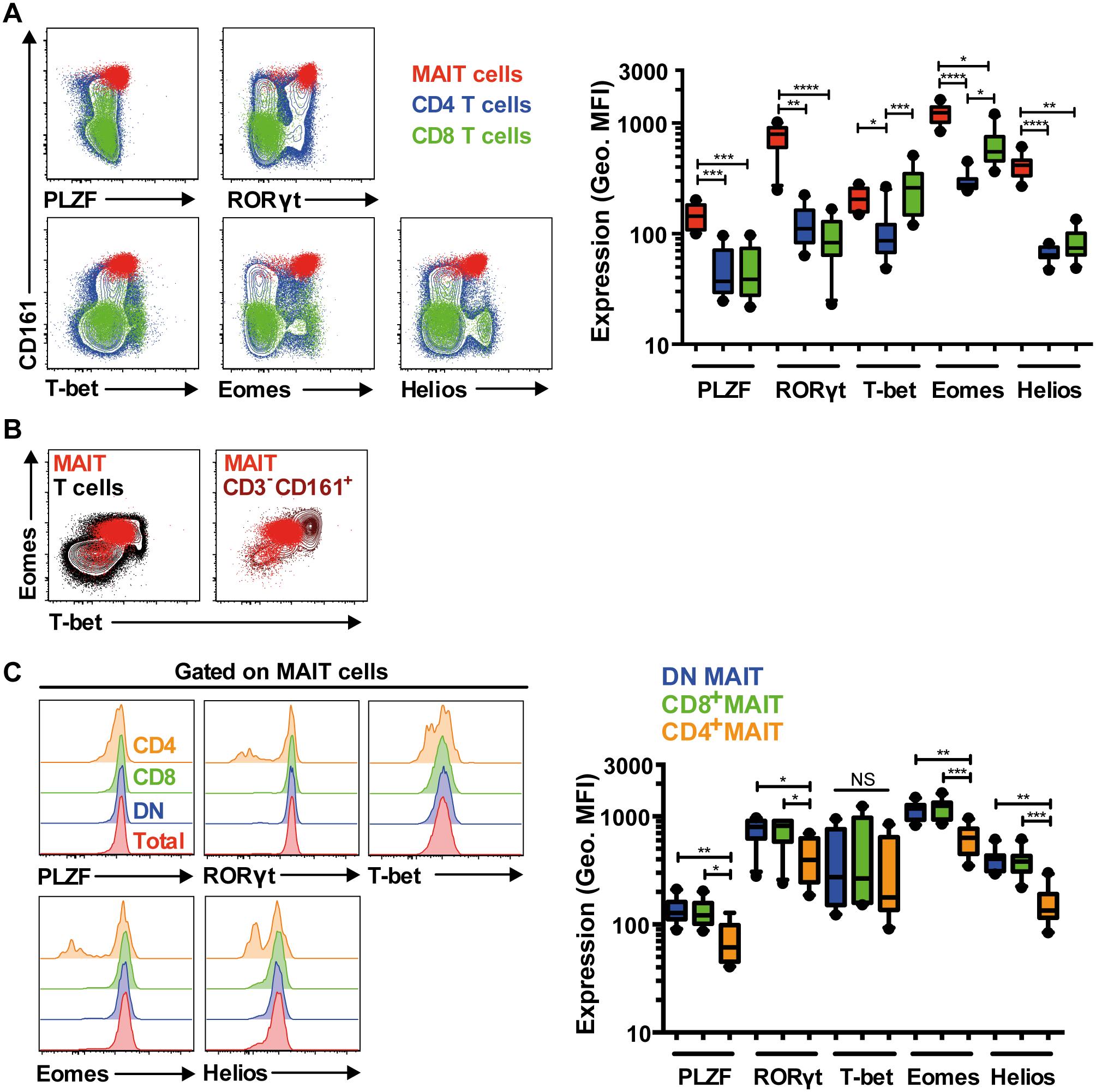 MAIT cells express a distinct transcription factor profile.