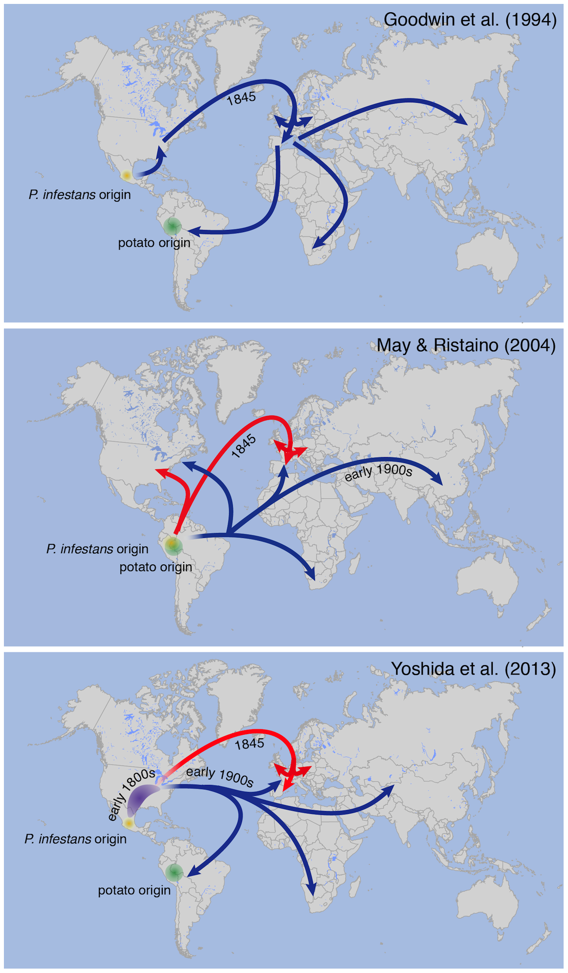 Different models proposed for 19th-century <i>P.</i> infestans pandemics.