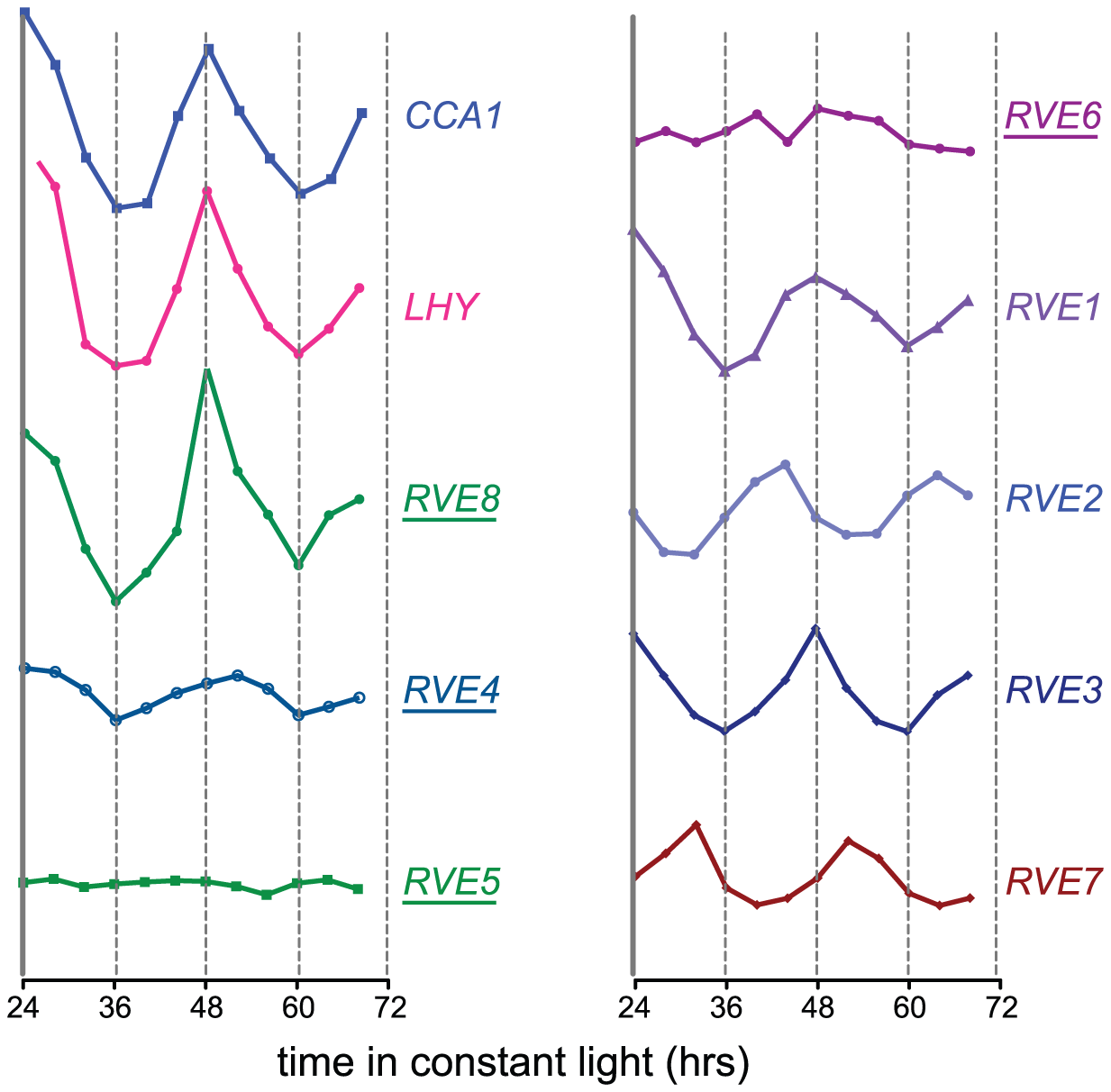 Circadian expression patterns of the <i>CCA1</i>, <i>LHY</i>, and <i>RVE</i> genes.