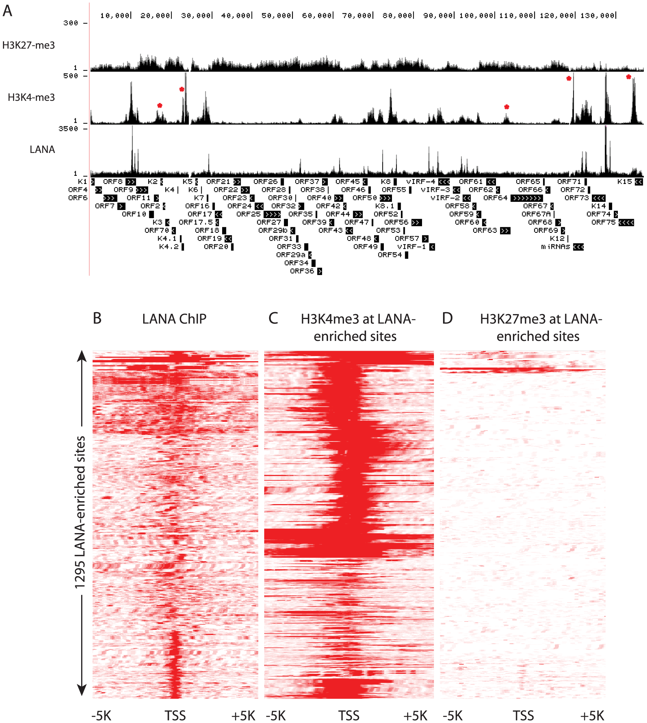 LANA and H3K4me3 but not H3K27 overlap at many regions of the KSHV and human genome in BCBL-1 cells.