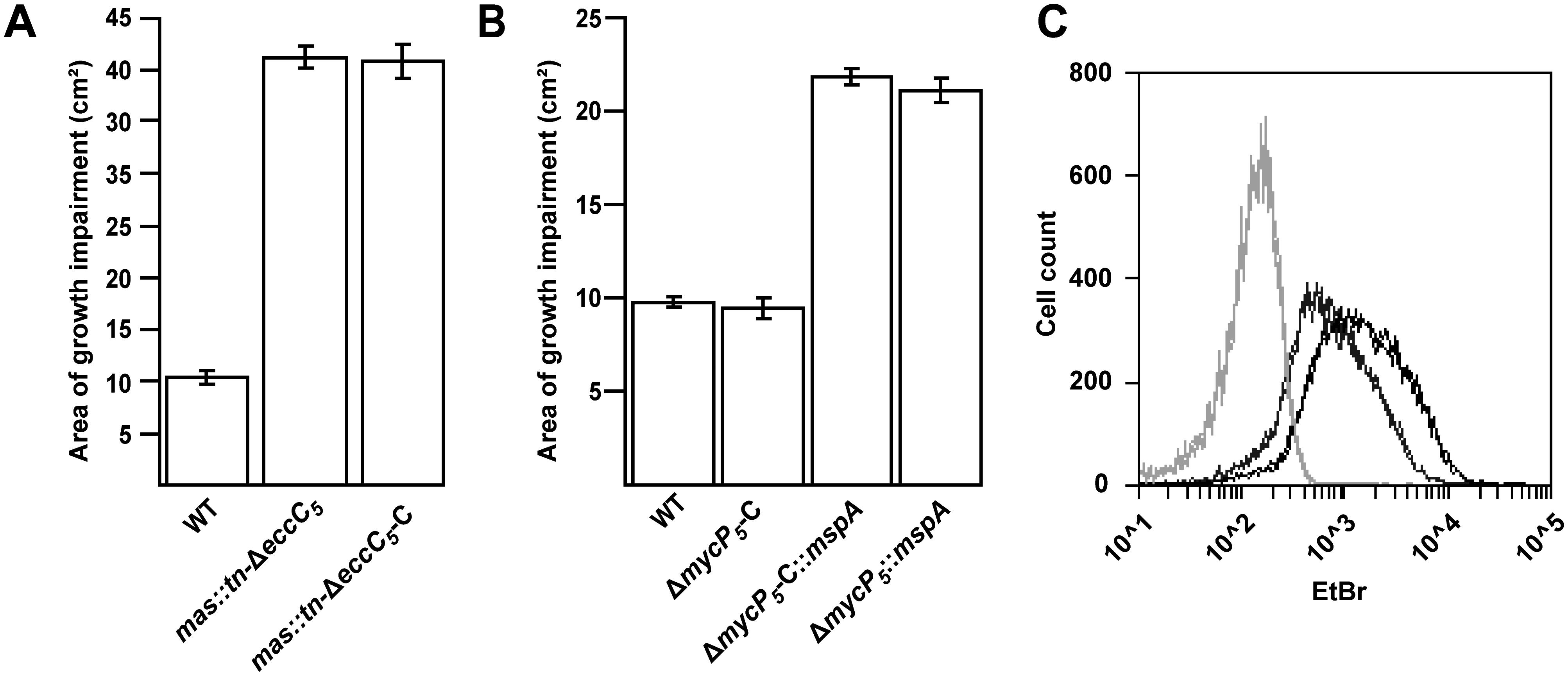 <i>mas</i> mutation or introduction of <i>mspA</i> lead to increased outer membrane permeability.