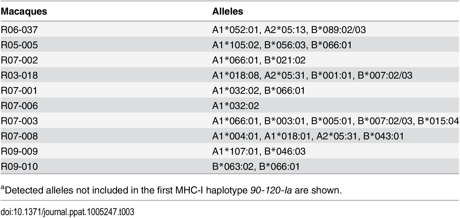Alleles in the second MHC-I haplotypes in macaques<em class=&quot;ref&quot;><sup>a</sup></em>