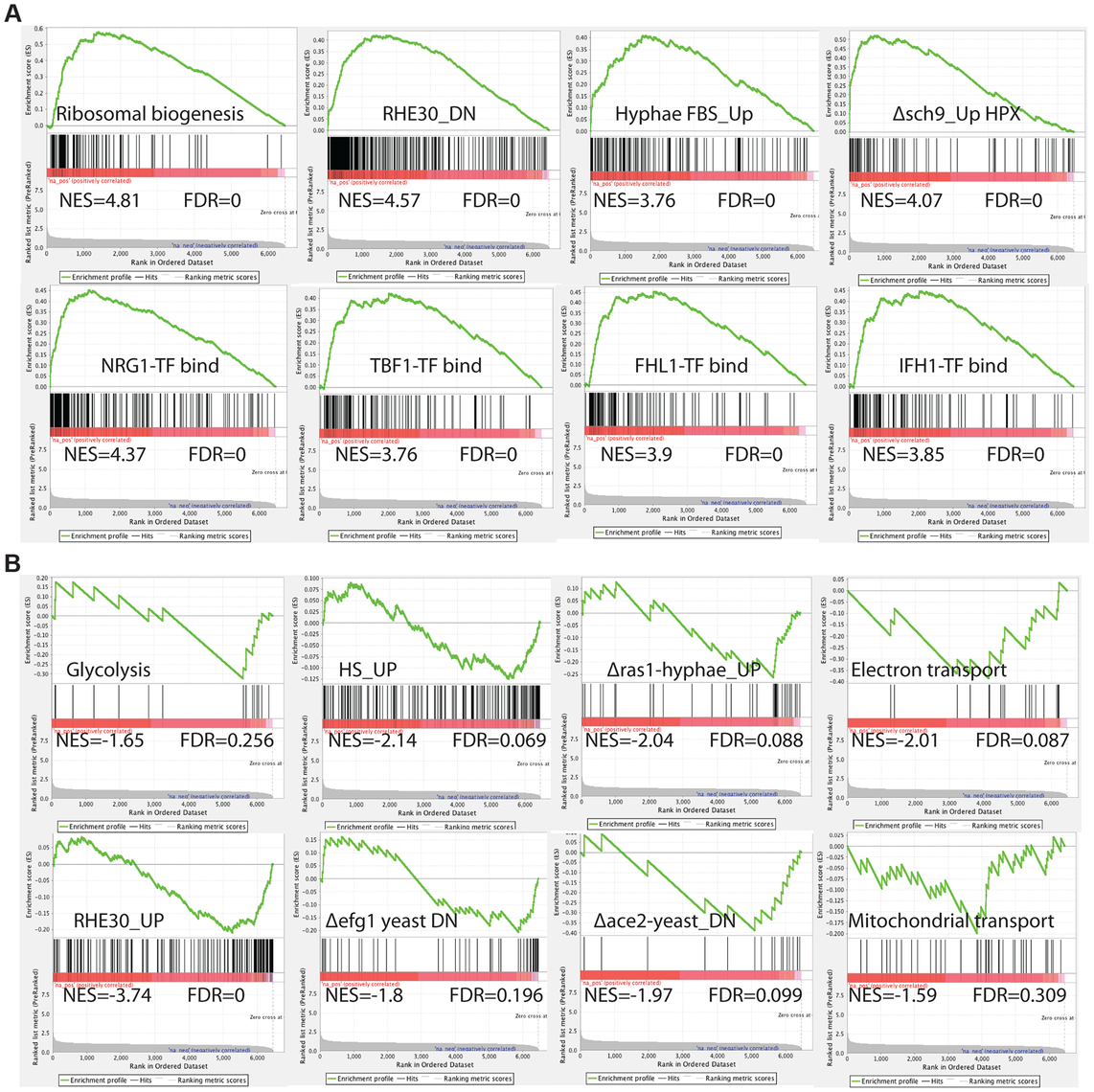 GSEA analysis of the genes differentially expressed in the absence of Med7 in <i>C. albicans</i>.
