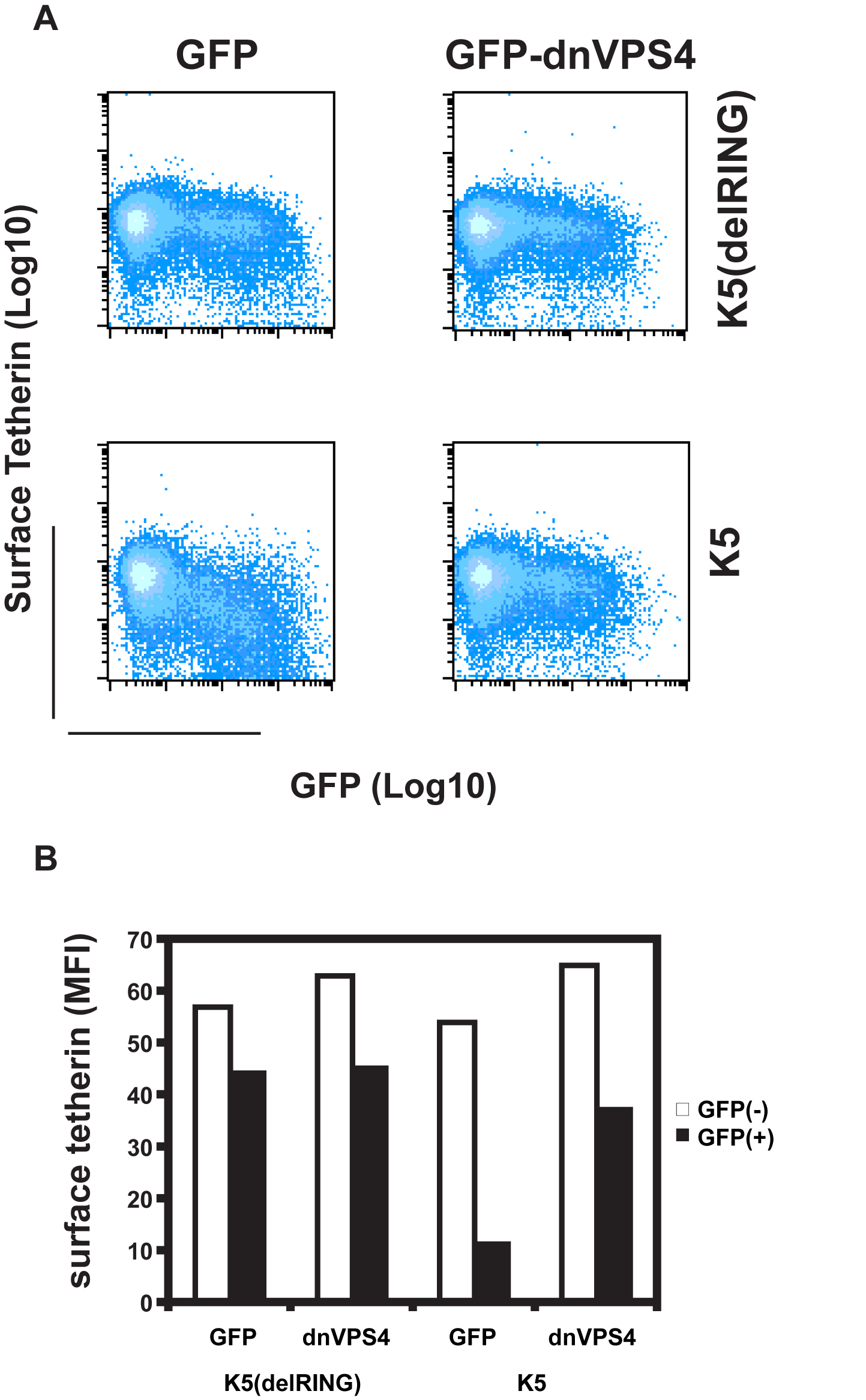 Cell-surface down-regulation of tetherin by K5 is inhibited by dominant-negative VPS4.