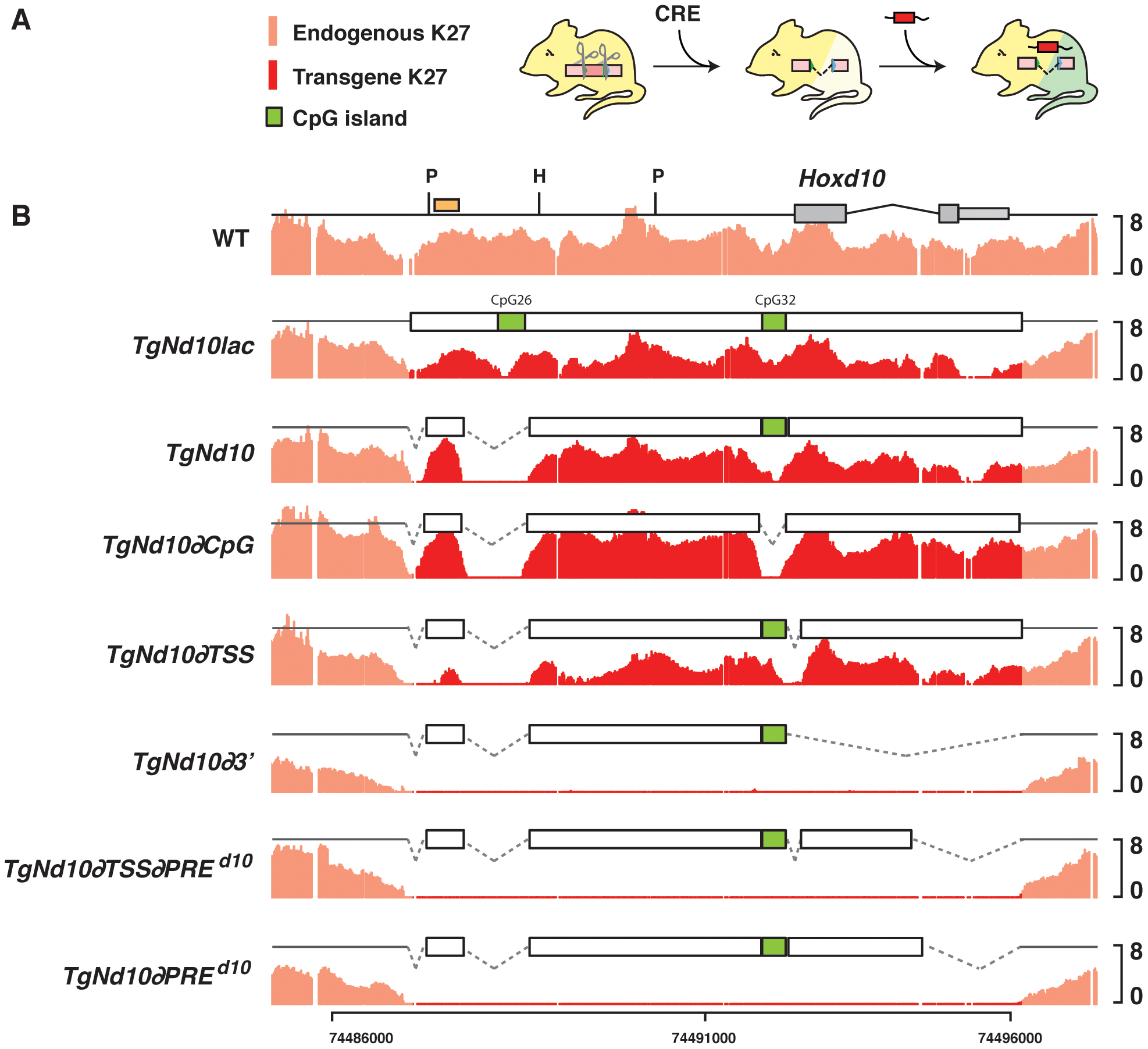 H3K27me3 profiles on transgenes <i>in embryo</i>.
