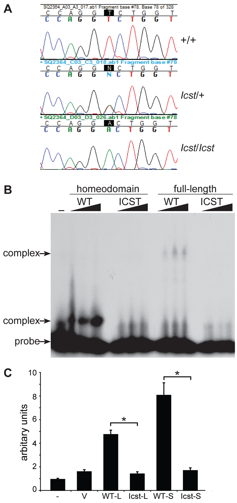 <i>Icst</i> is a homeodomain missense mutation of <i>Lmx1b</i> that abolishes protein function.