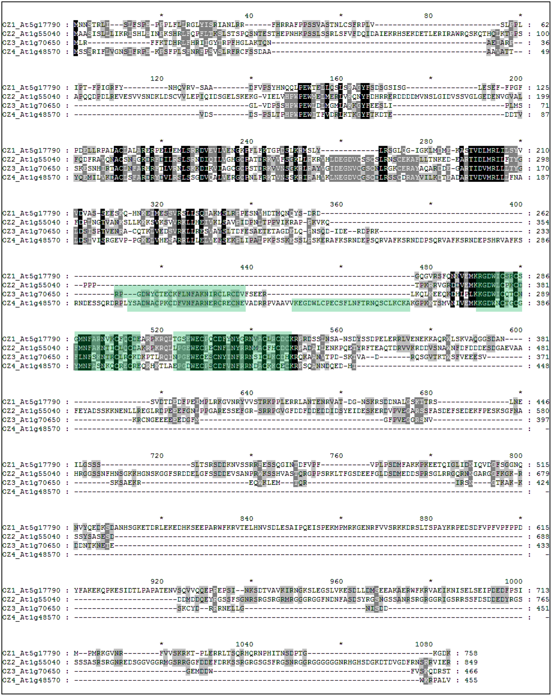 OZ1 belongs to a small family in Arabidopsis.