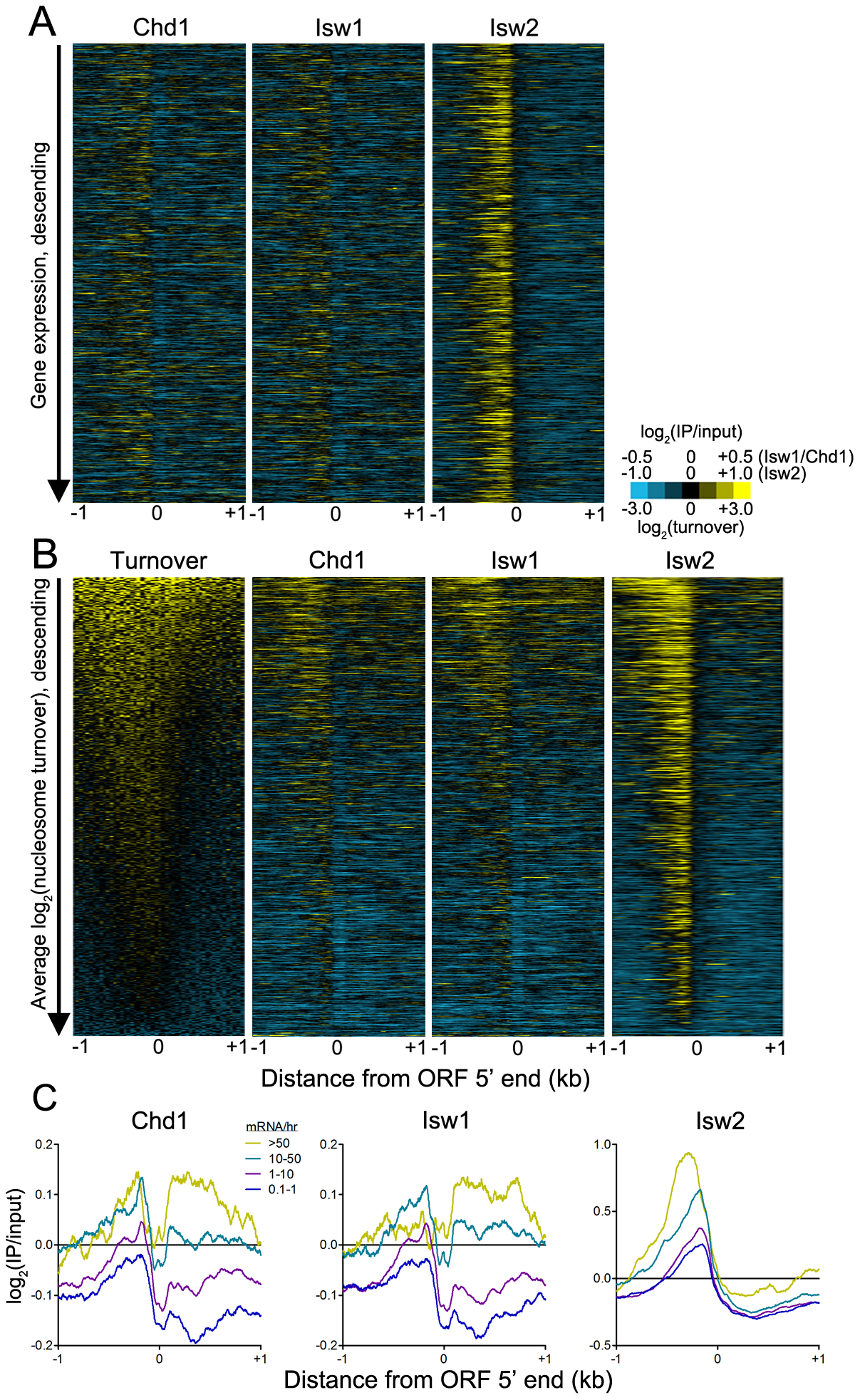 ISWI and CHD remodeler binding is positively associated with histone turnover and transcription rate.