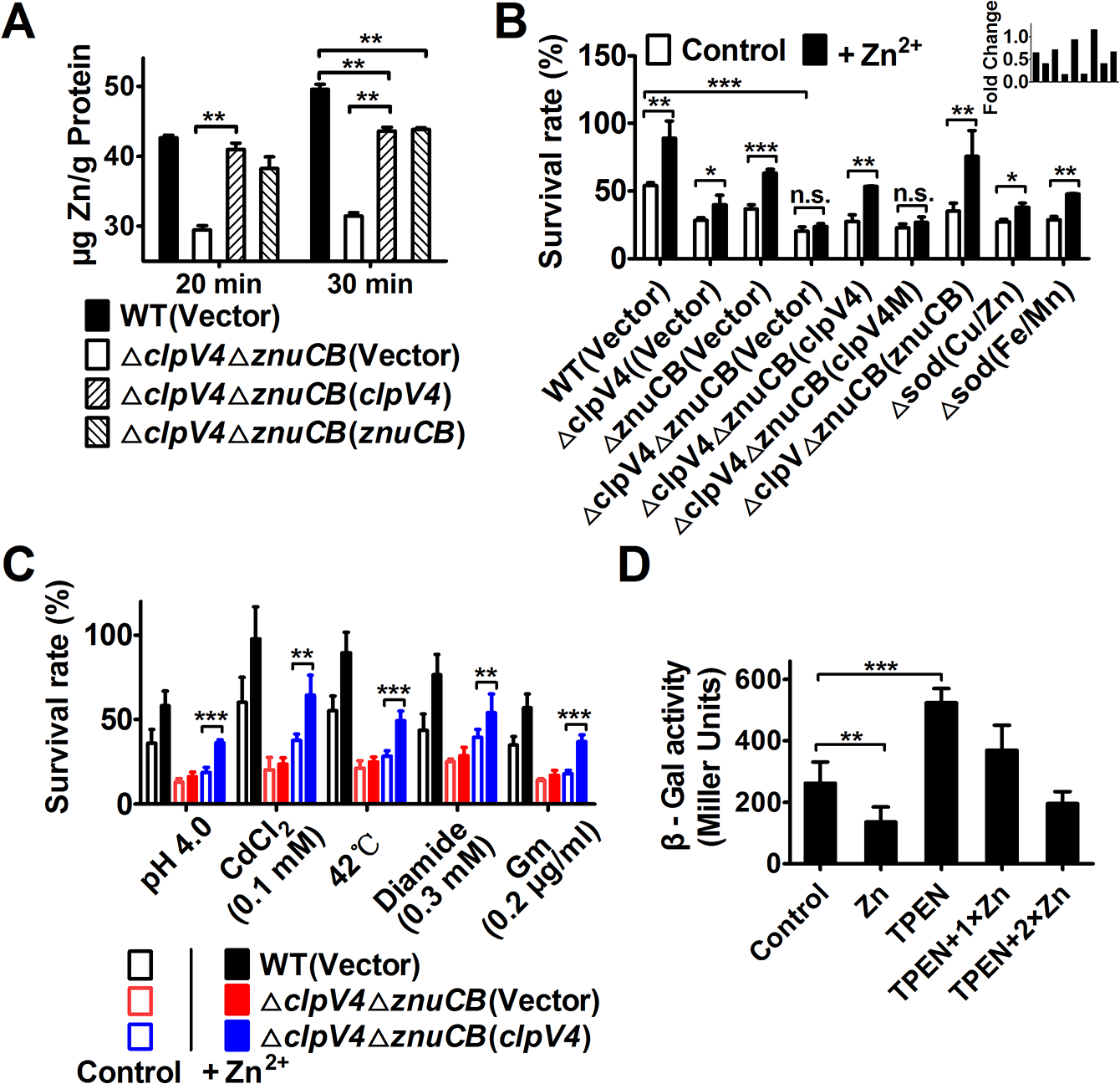 T6SS-4 is important for the accumulation of intracellular Zn<sup>2+</sup> under oxidative stress conditions.
