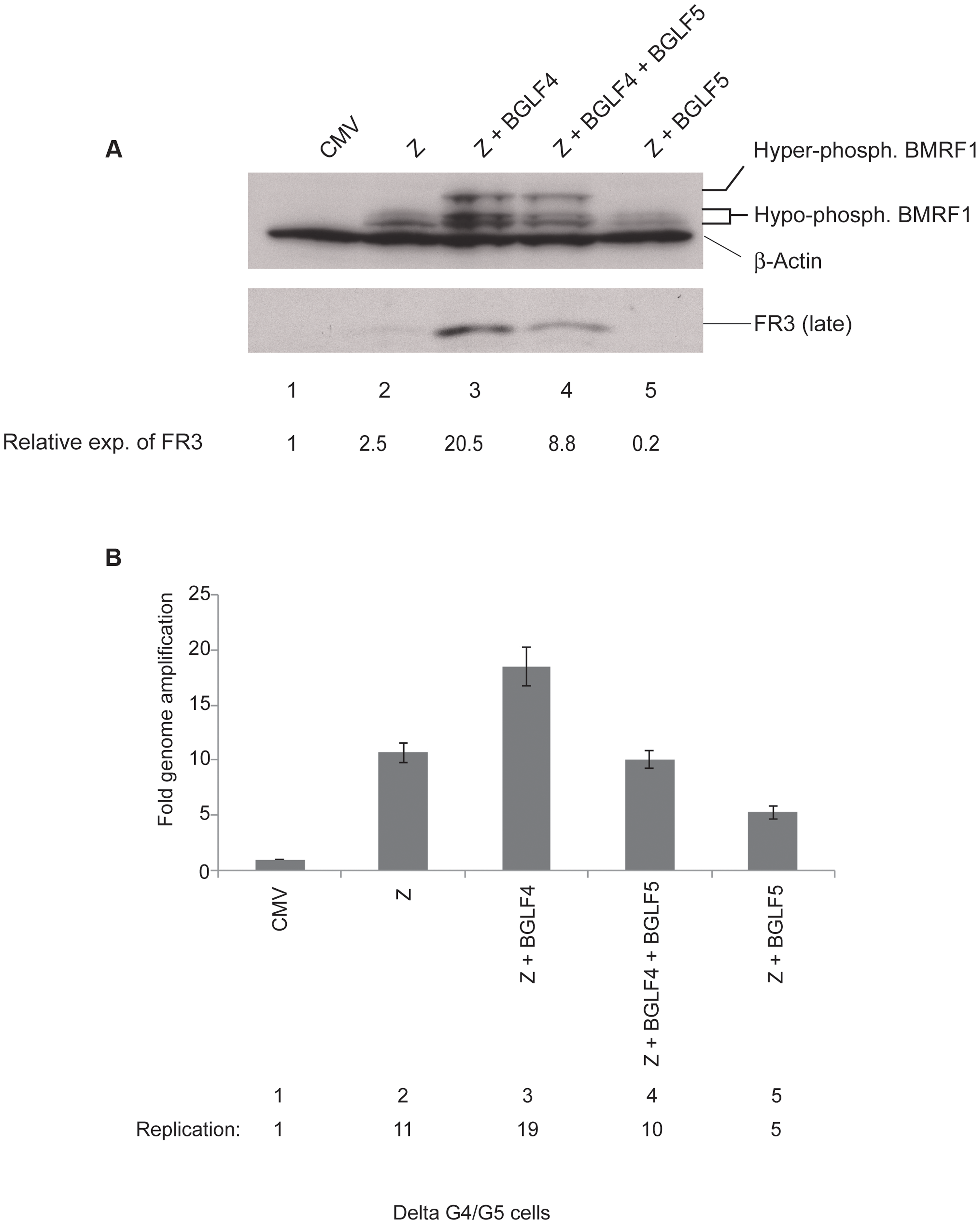 BGLF4 markedly enhances expression of the BFRF3 late protein.