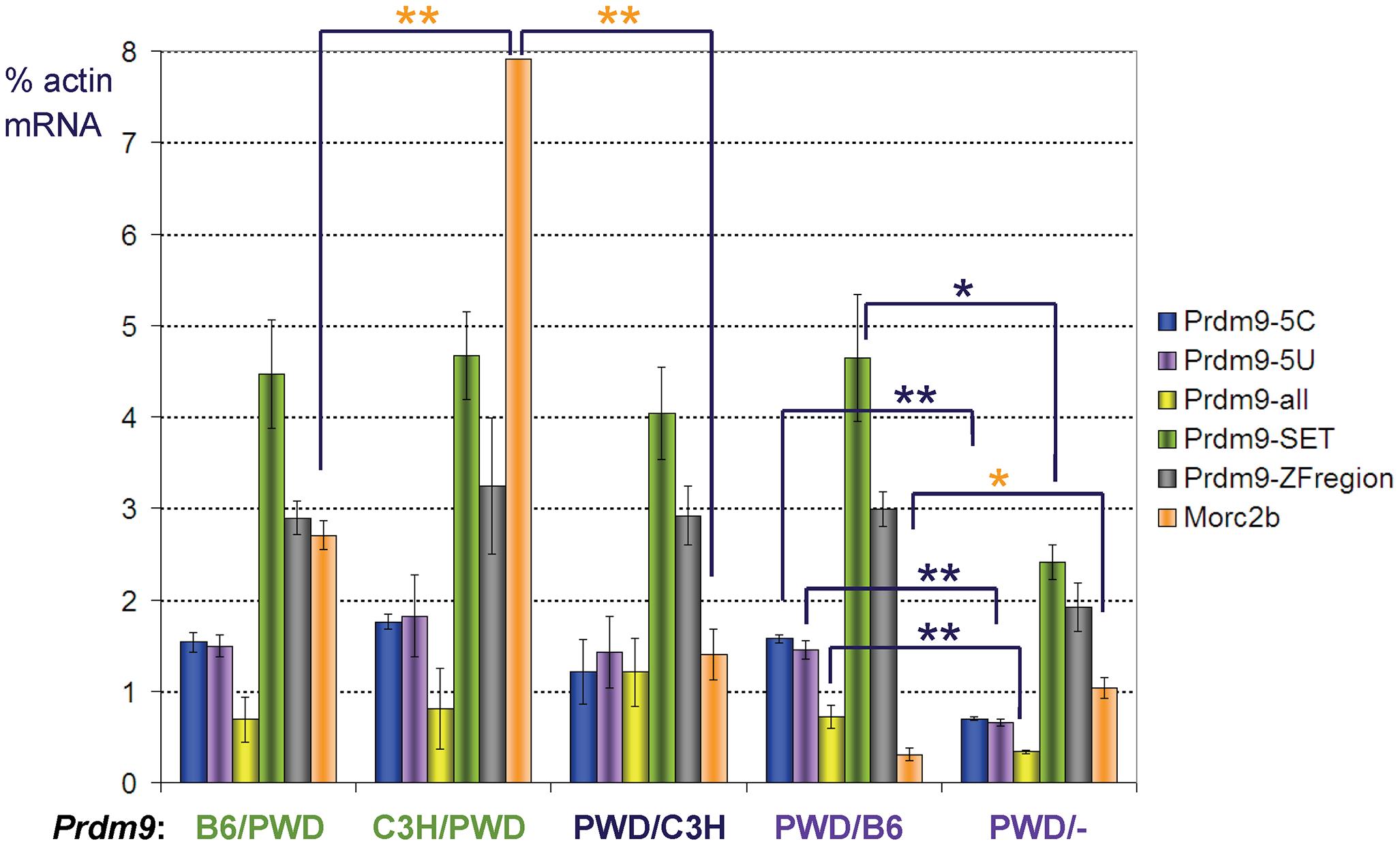 Expression of <i>Prdm9</i> and <i>Morc2b</i> in prepubertal hybrid testis.