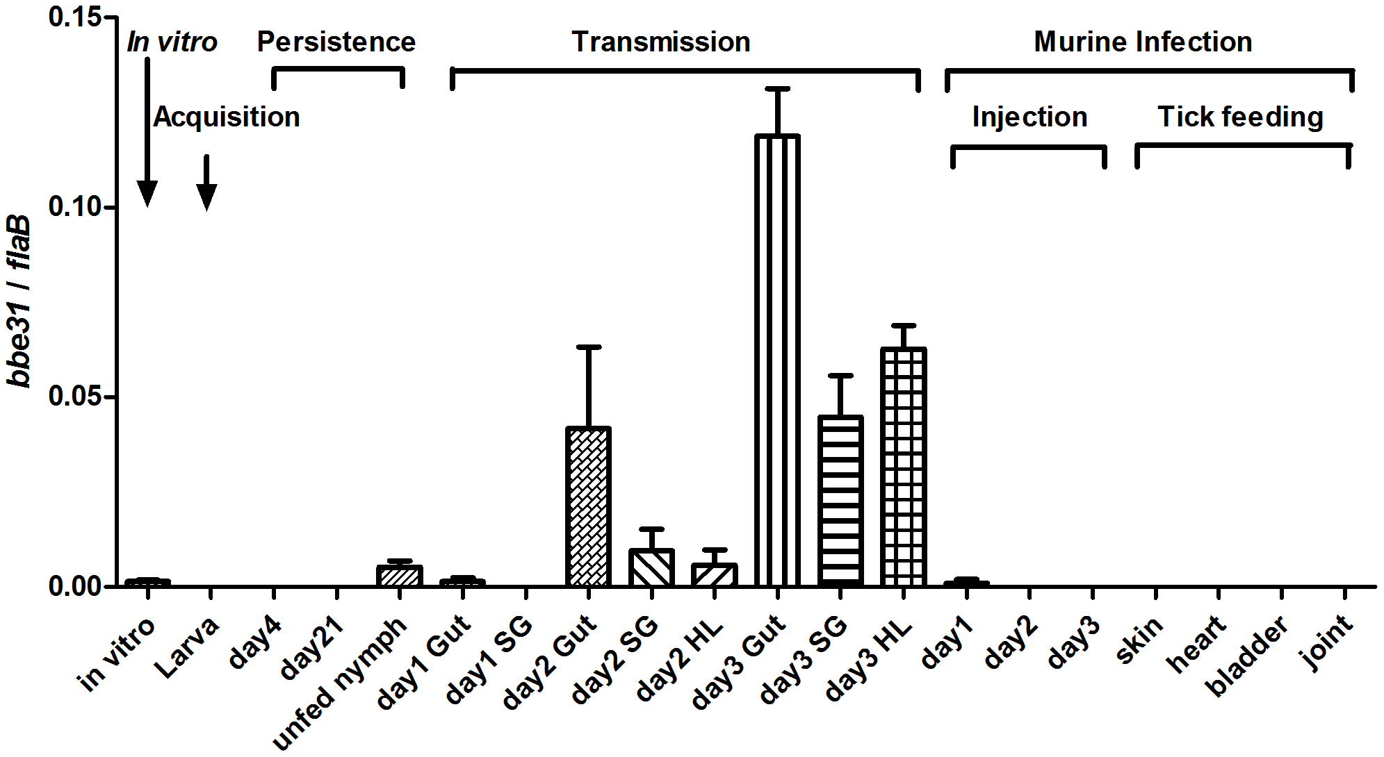 <i>bbe3</i>1 expression profile throughout representative stages of the natural spirochete life cycle.