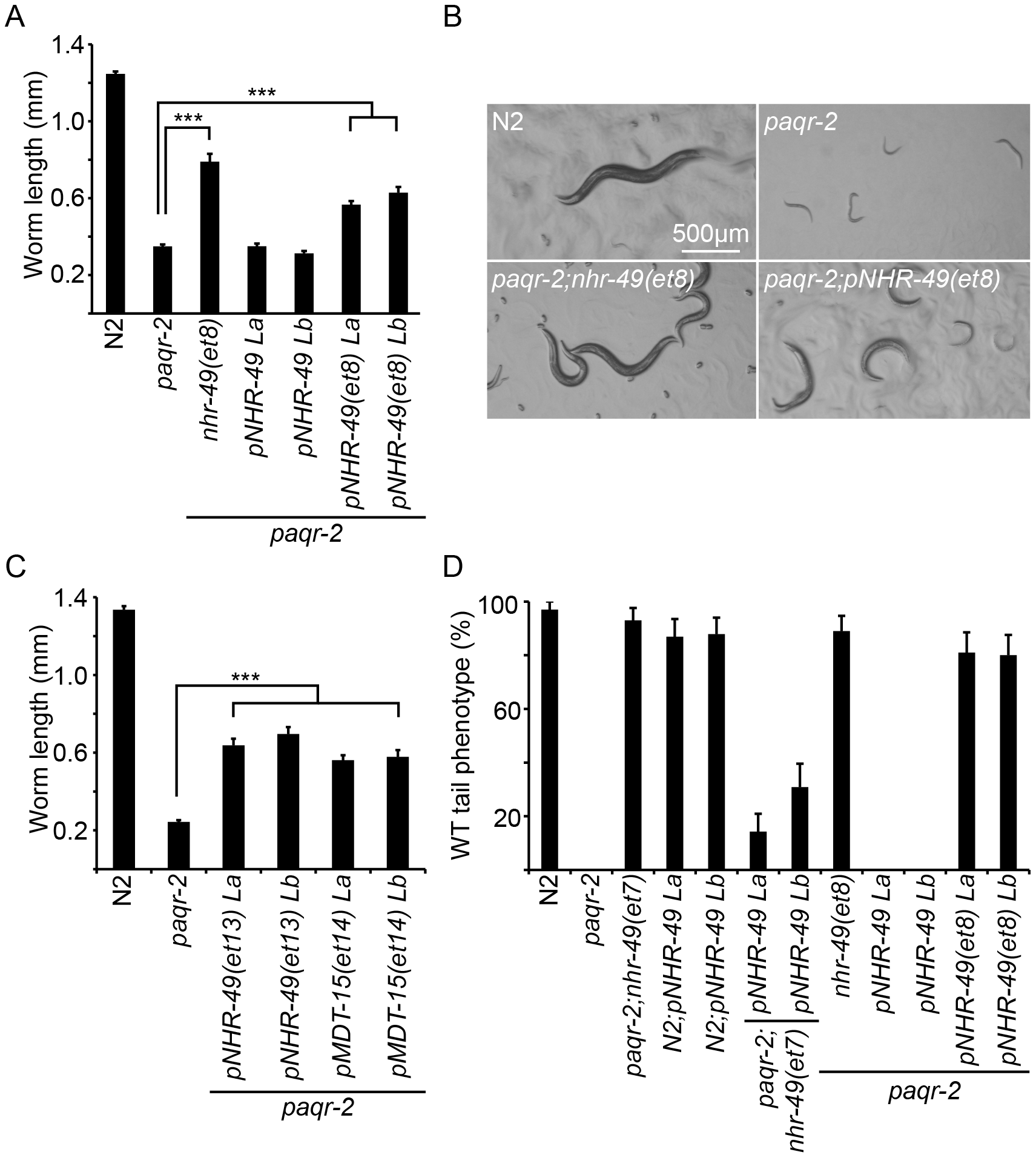 The <i>paqr-2</i> suppressor mutations in <i>nhr-49</i> and <i>mdt-15</i> are <i>gof</i> alleles.