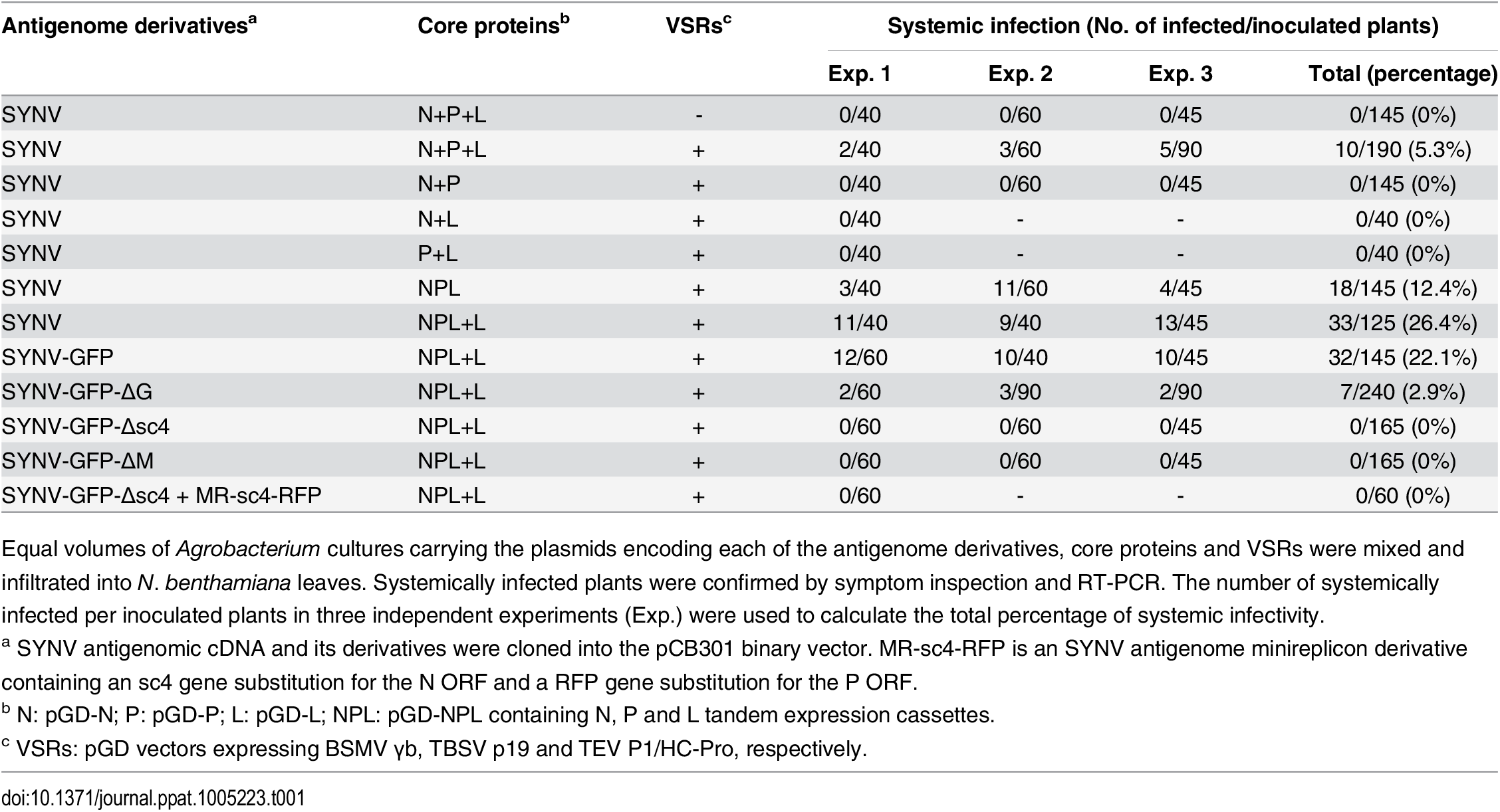 Systemic infection rates of SYNV antigenomic cDNA and derivatives in <i>Nicotiana benthamiana</i> supported by various combinations of core proteins and viral suppressors of RNA silencing (VSRs).