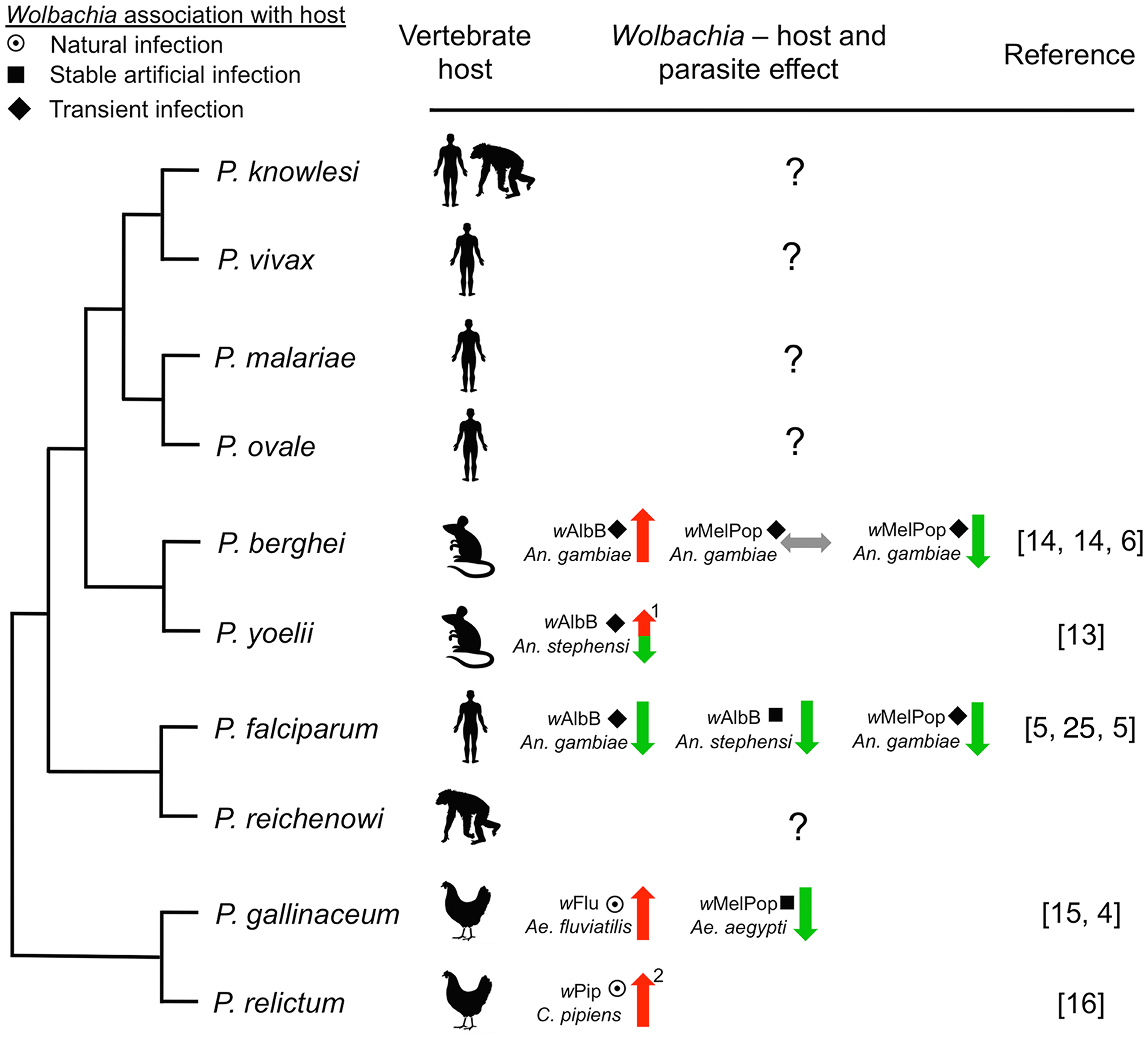 Representative phylogenetic dendrogram of <i>Plasmodium</i> parasites, their vertebrate hosts, and the influence of <i>Wolbachia</i> infection on parasite development within the mosquito vector.