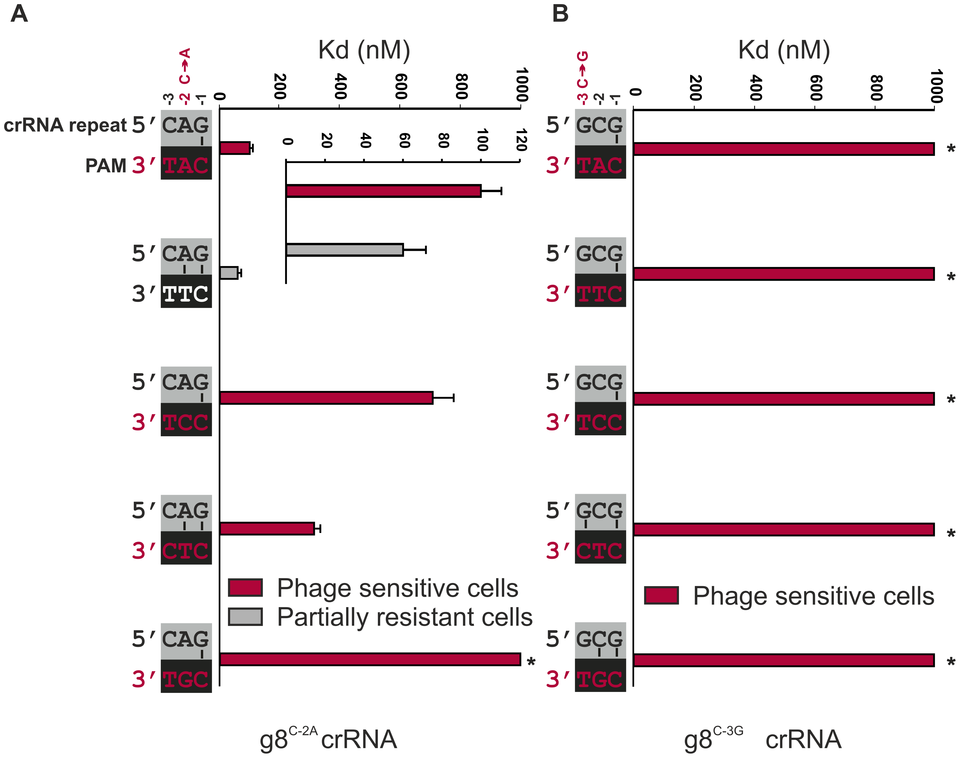 Base pairing at the −2 and −3 positions does not interfere with CRISPR-immunity.