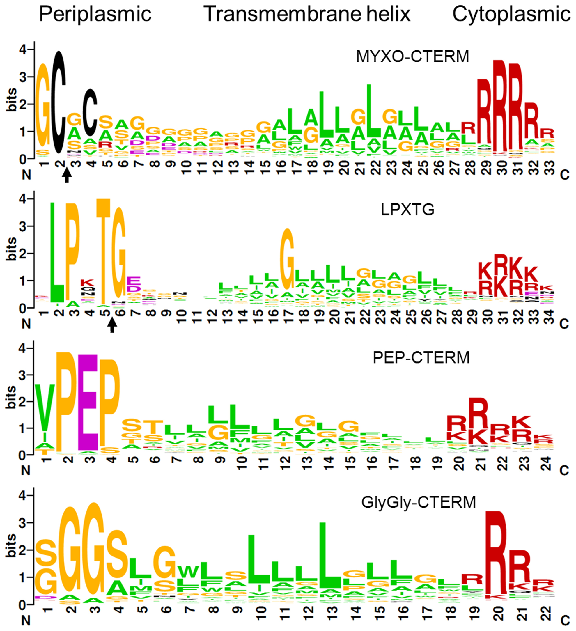 Consensus sequence LOGO of indicated bacterial C-terminal protein sorting motifs.