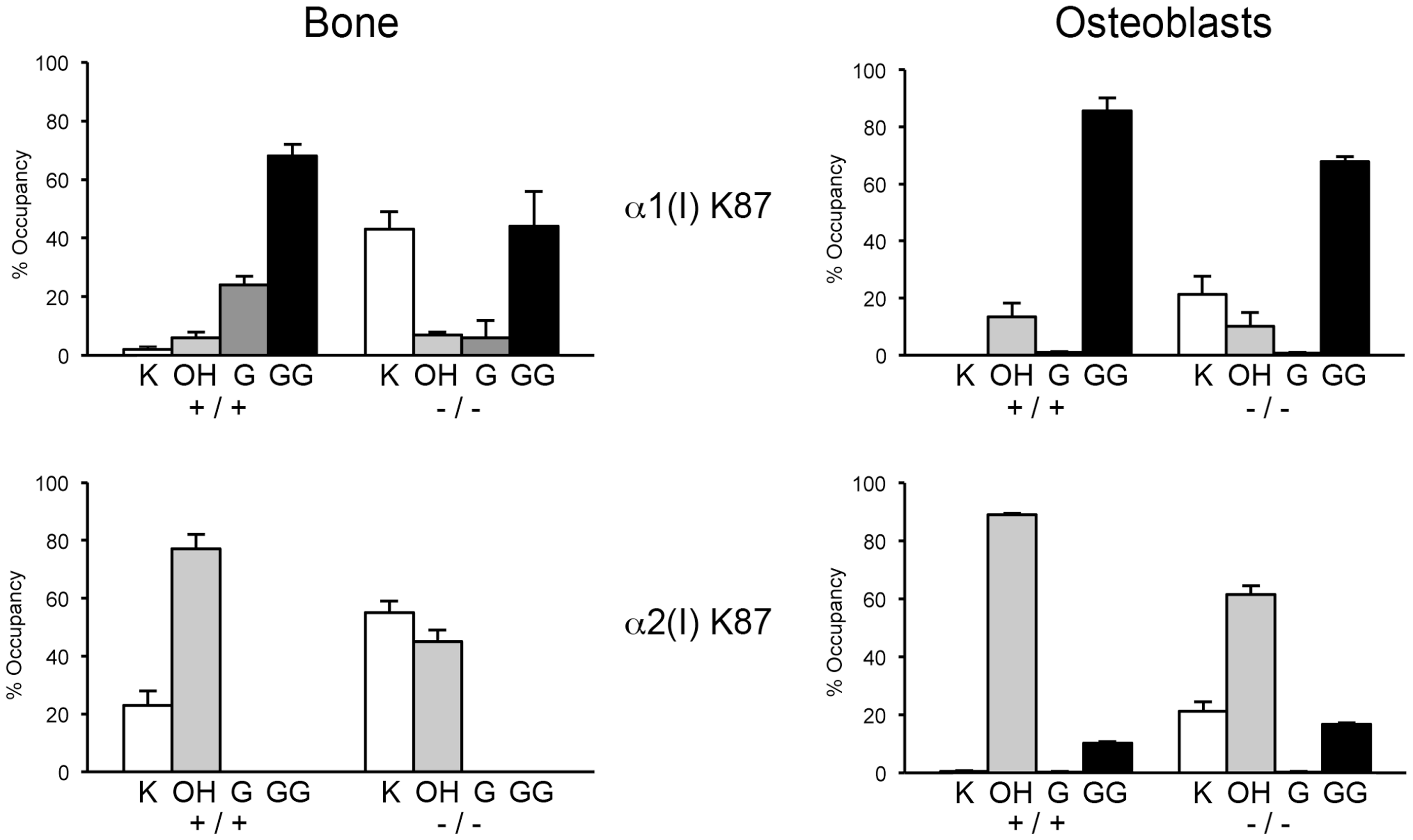Altered post-translational modification of specific type I collagen lysine residues in the absence of Ppib.