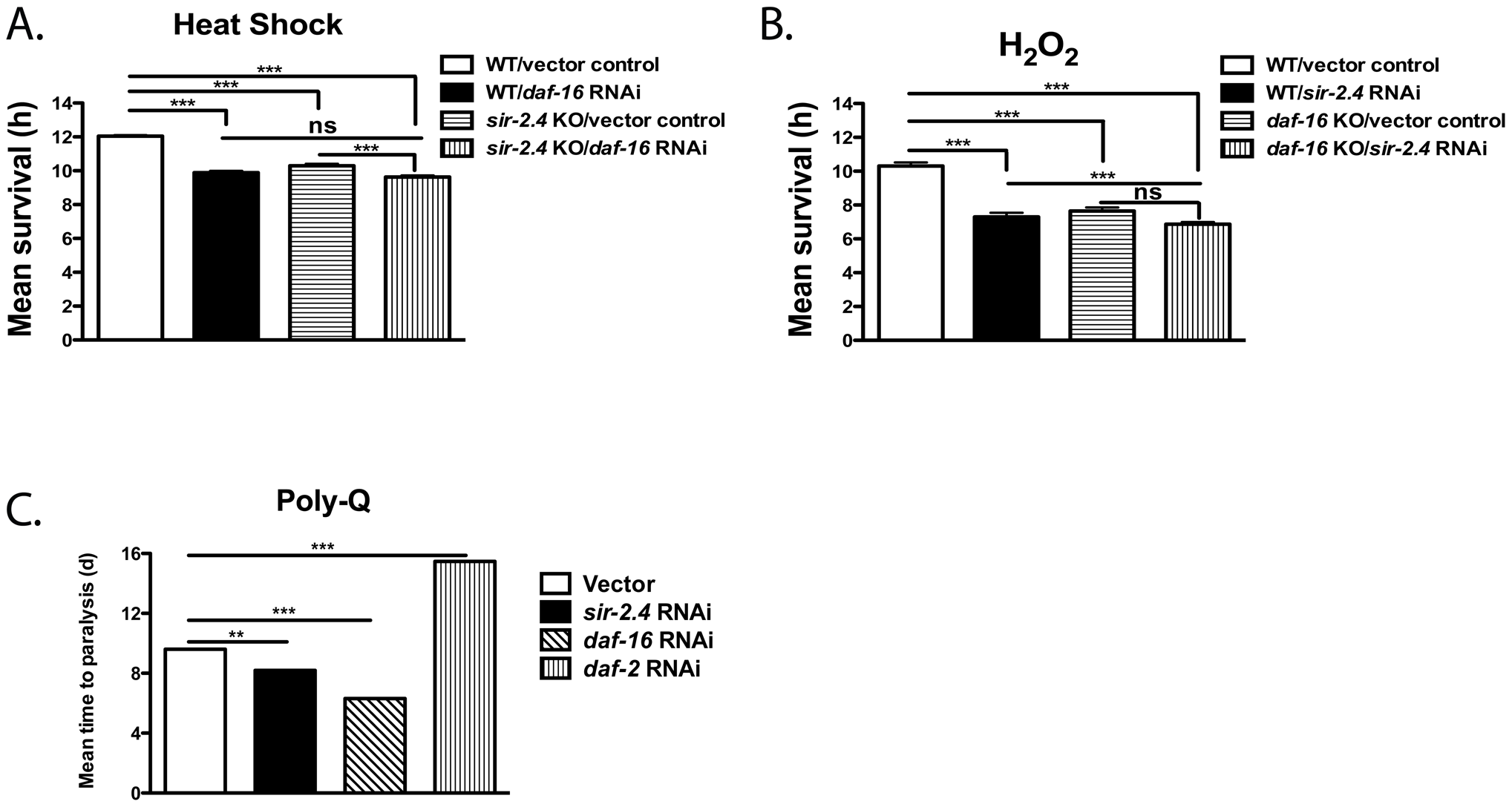 SIR-2.4 promotes stress resistance.