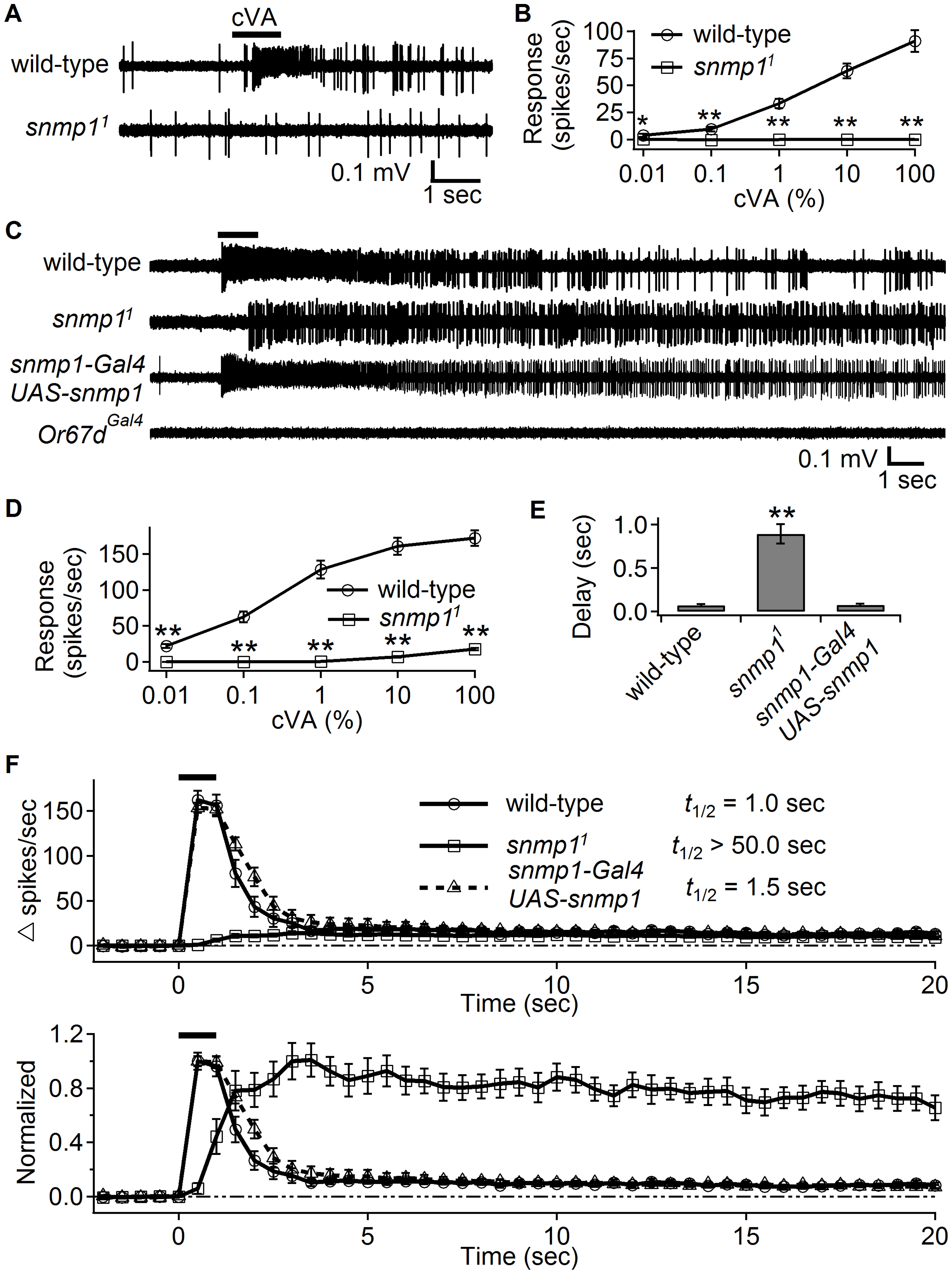 High cVA levels elicited weak responses in <i>snmp1<sup>1</sup></i>, which displayed slow activation and deactivation kinetics.