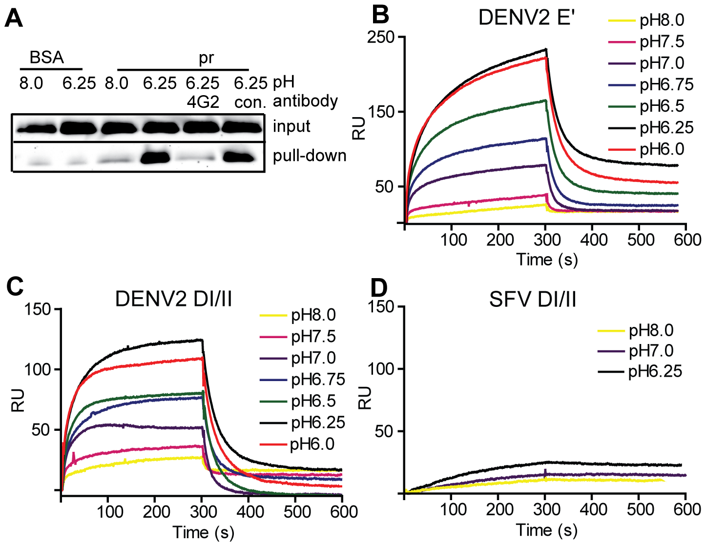 Pr peptide binds DENV E proteins in a pH-dependent manner.
