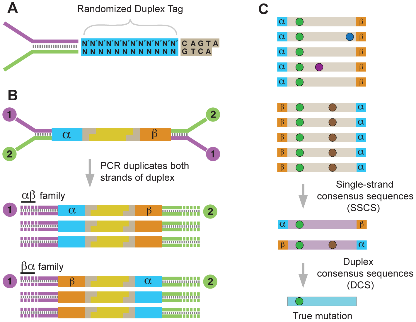Overview of the Duplex Sequencing methodology.
