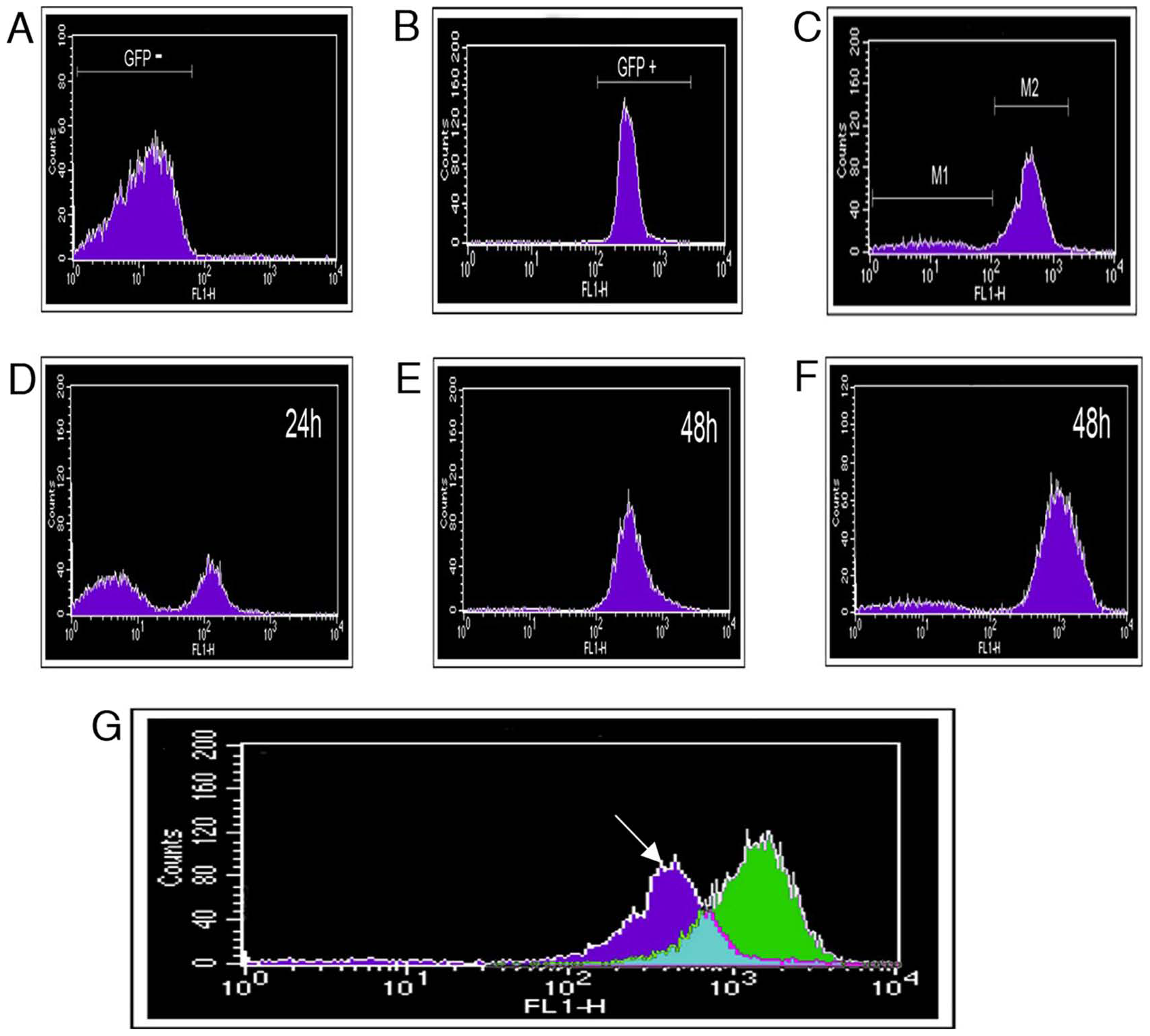 Fluorescence-activated cell sorting (FACS) separation of <i>P. syringae</i> pv. <i>phaseolicola</i> cells based on fluorescent protein expression.