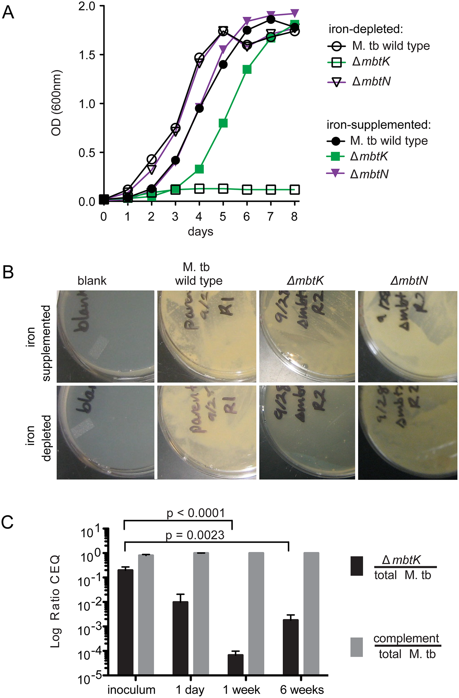 <i>mbtK</i> is required for growth during iron-starvation and early virulence <i>in vivo</i>.