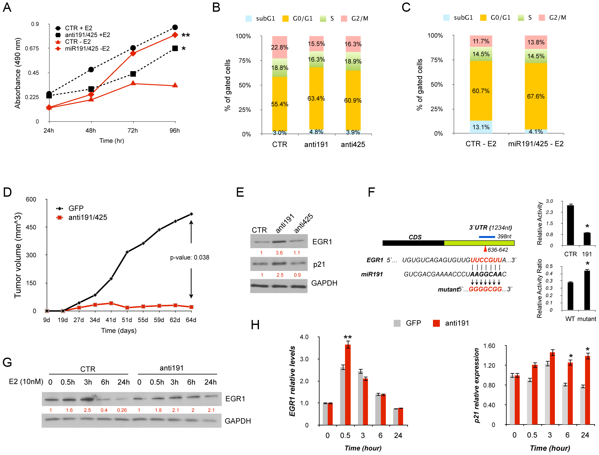 miR-191/425 cluster effects in ERα-positive breast cancer cells.