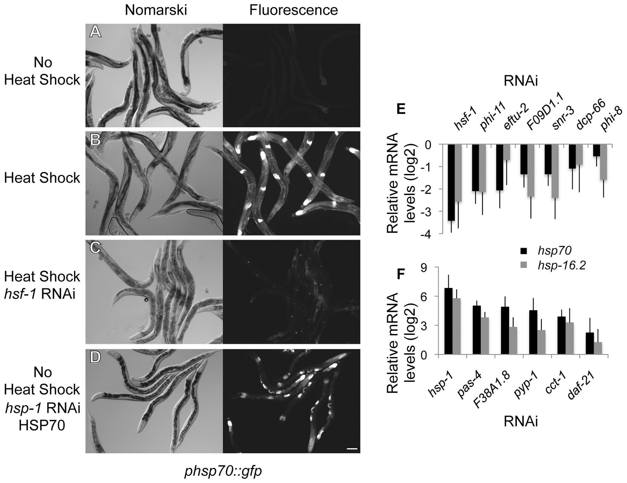 Genome-wide RNAi screen for HSR regulators.