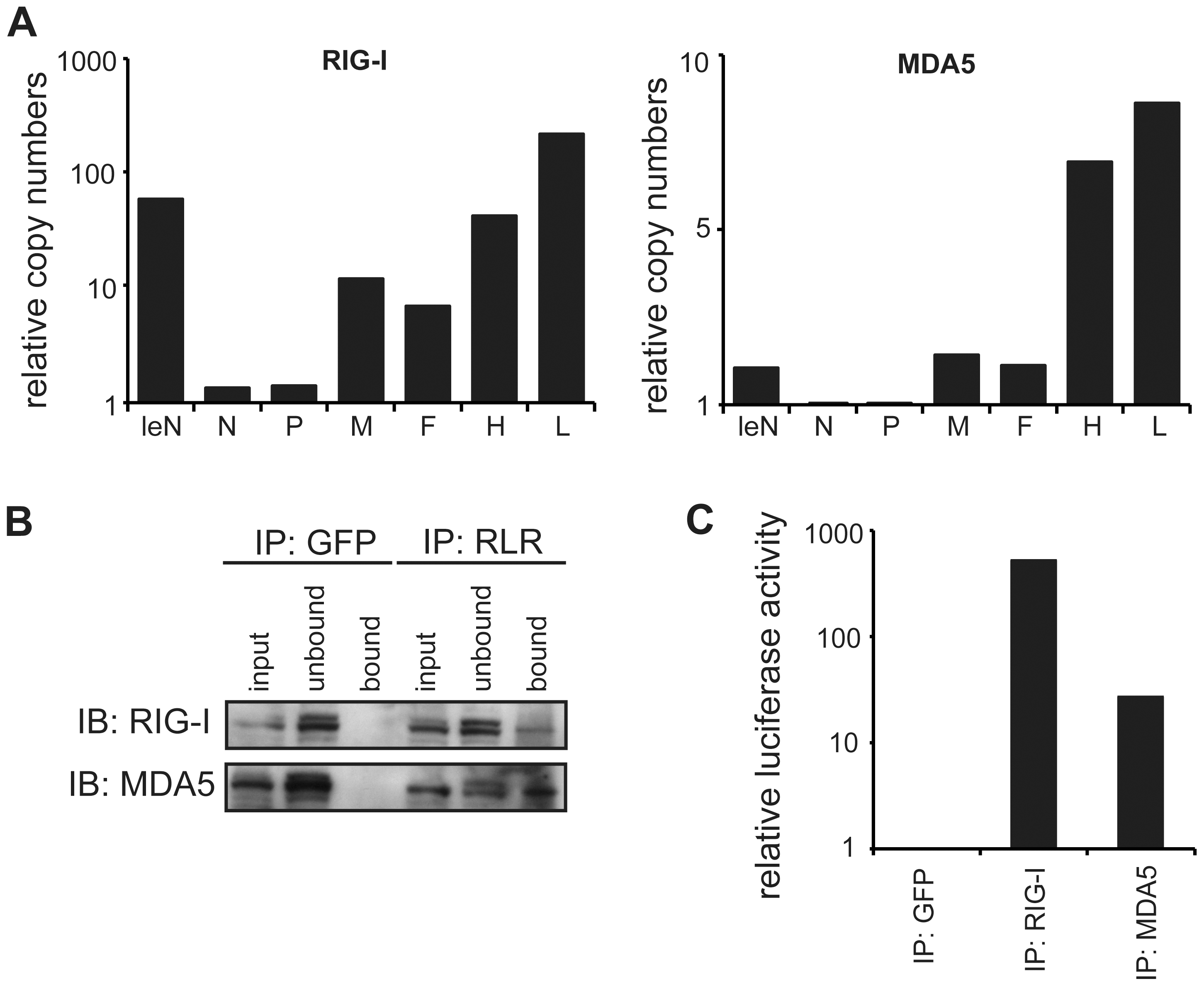 Quantitative PCR analysis of RLR-associated RNA from MeV-infected cells.