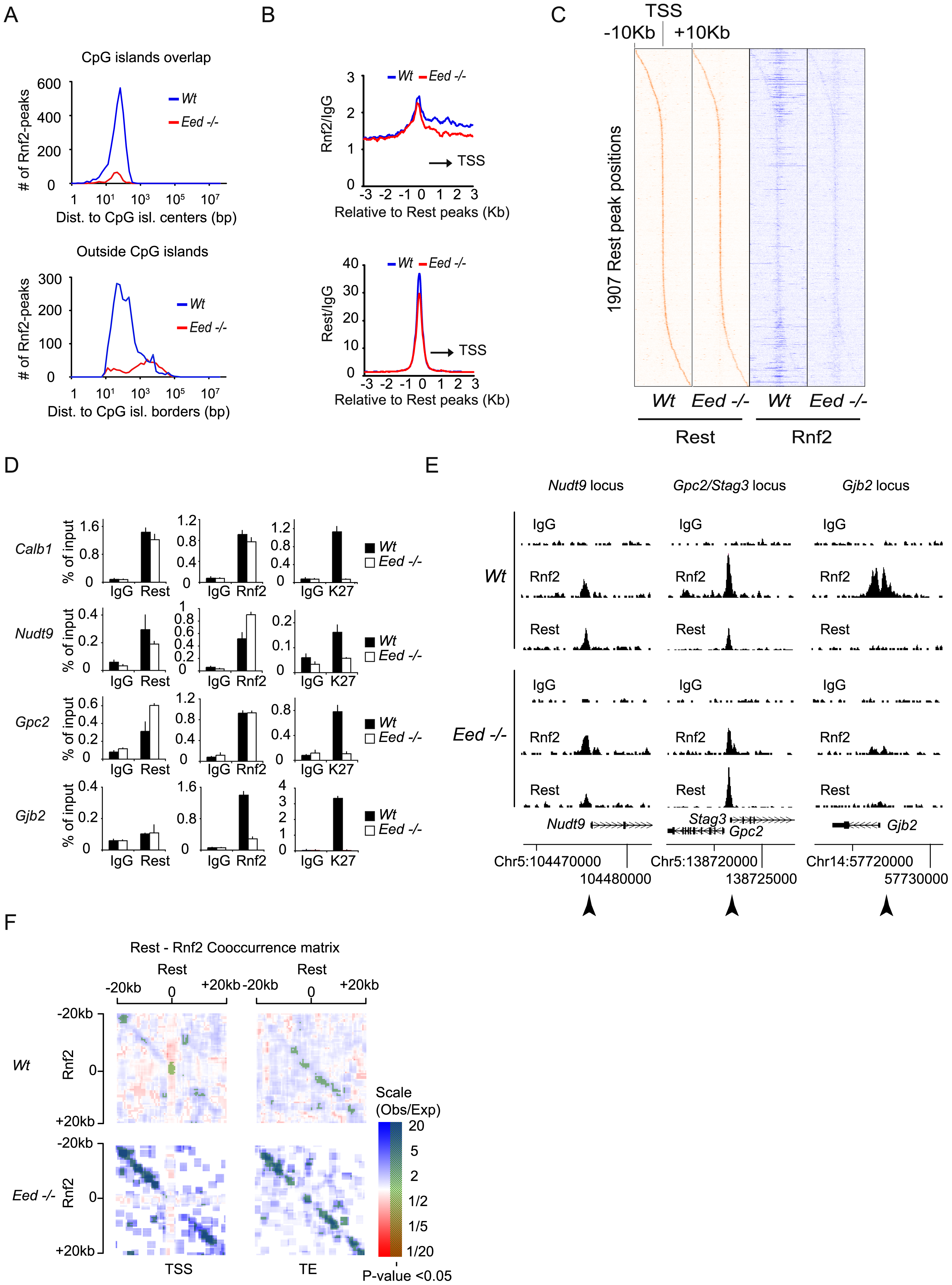 The recruitment of PRC1 at a number of Rest binding sites is independent of PRC2 activity in mES cells.