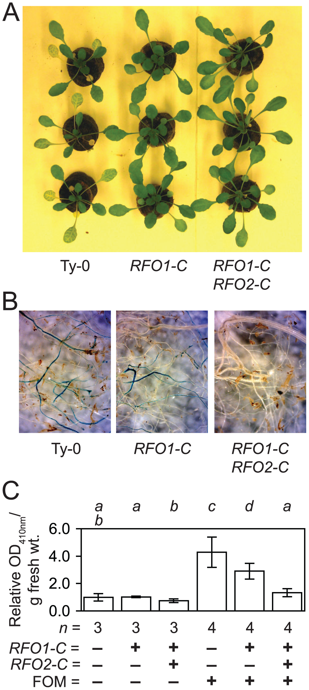 <i>RFO1-C</i> and <i>RFO2-C</i> restrict infection in roots.